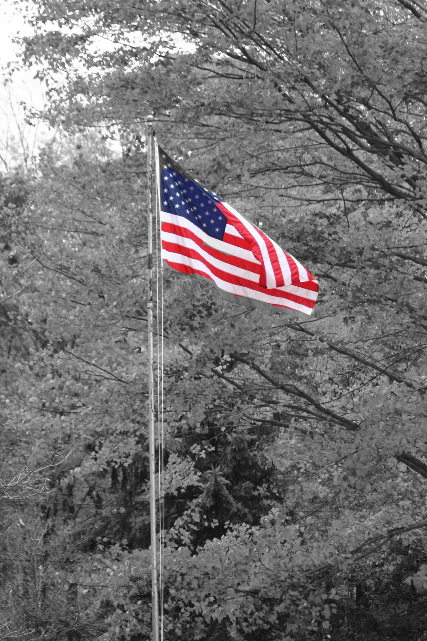 B&W with color American Flag by pamwallis