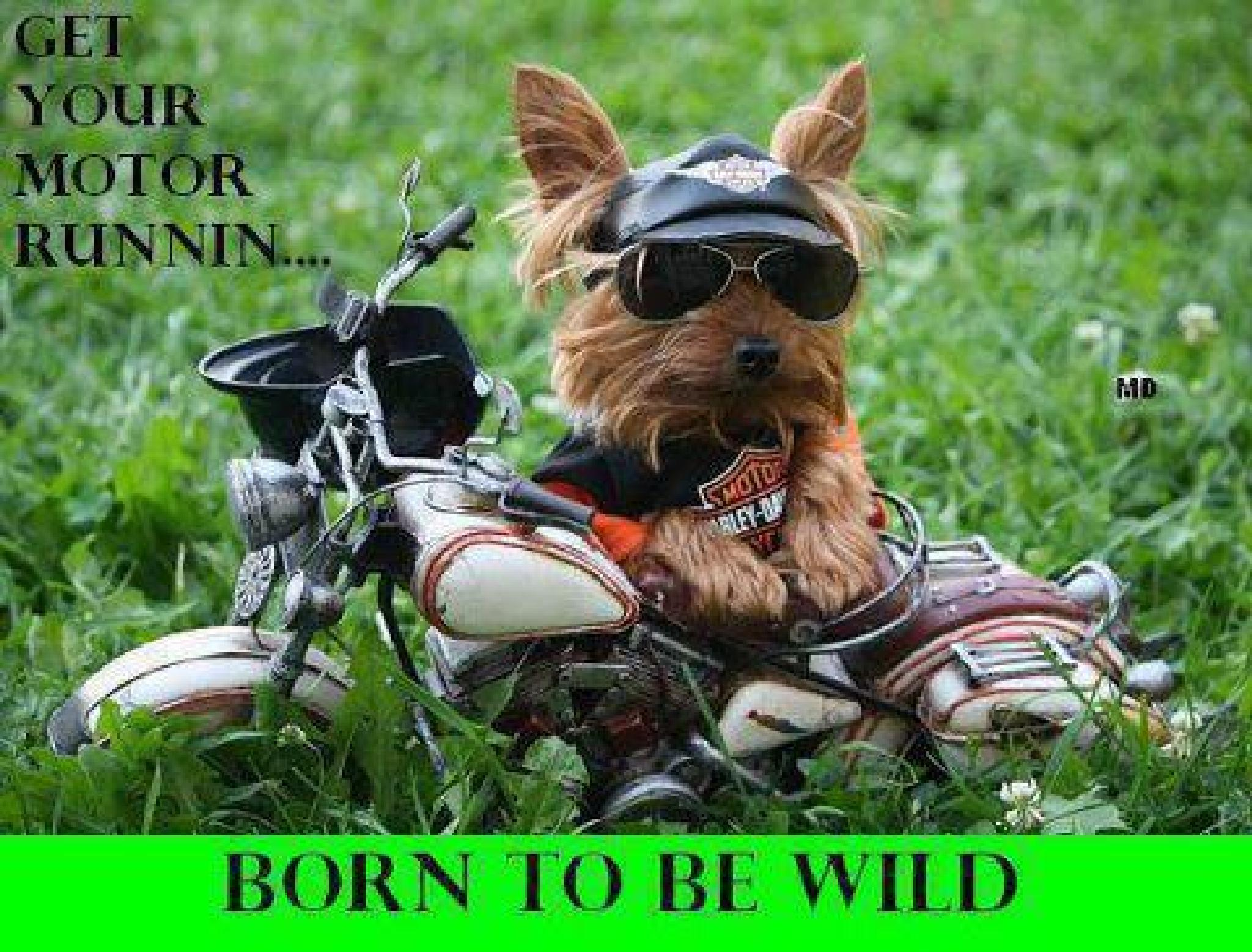Born to Be Wild by susan.bailey.1