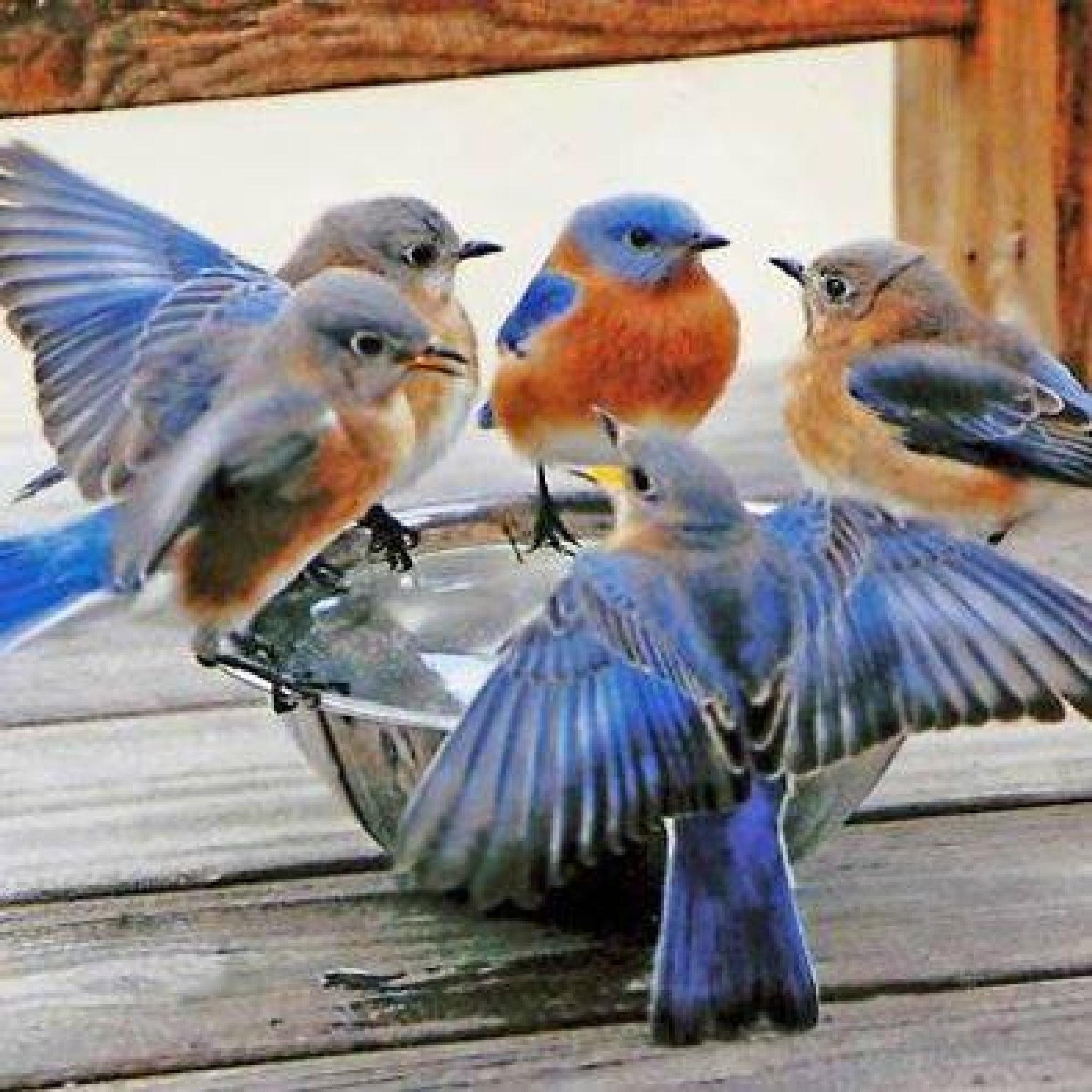 Pretty Birds Stop For a Drink by susan.bailey.1