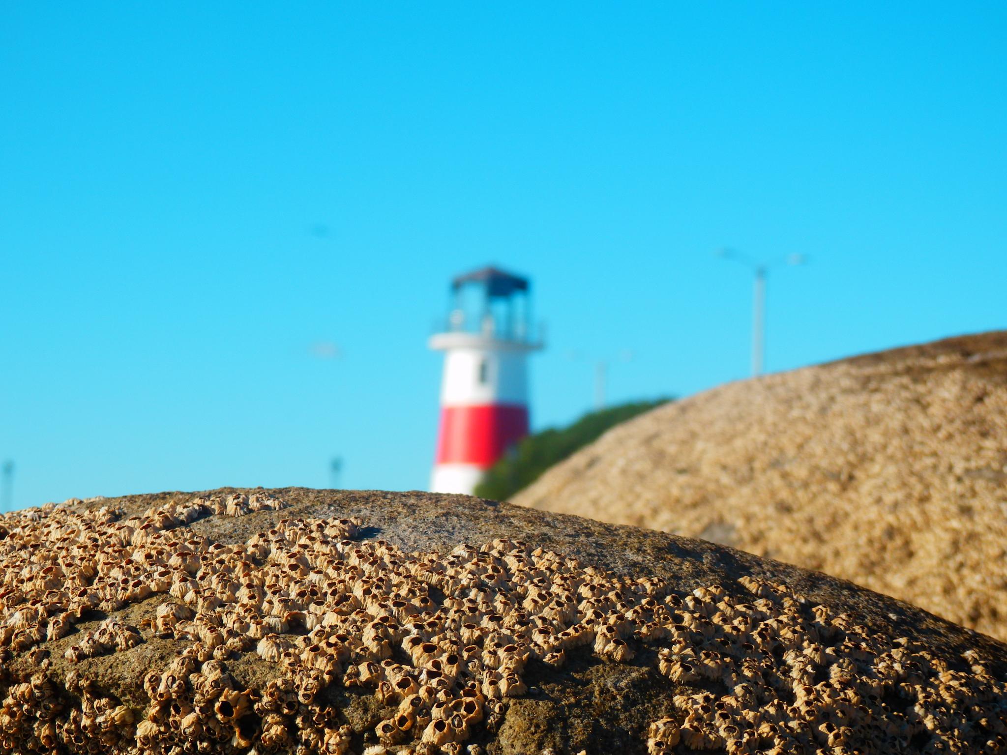 Conchas en la roca by KAMAQUECHI