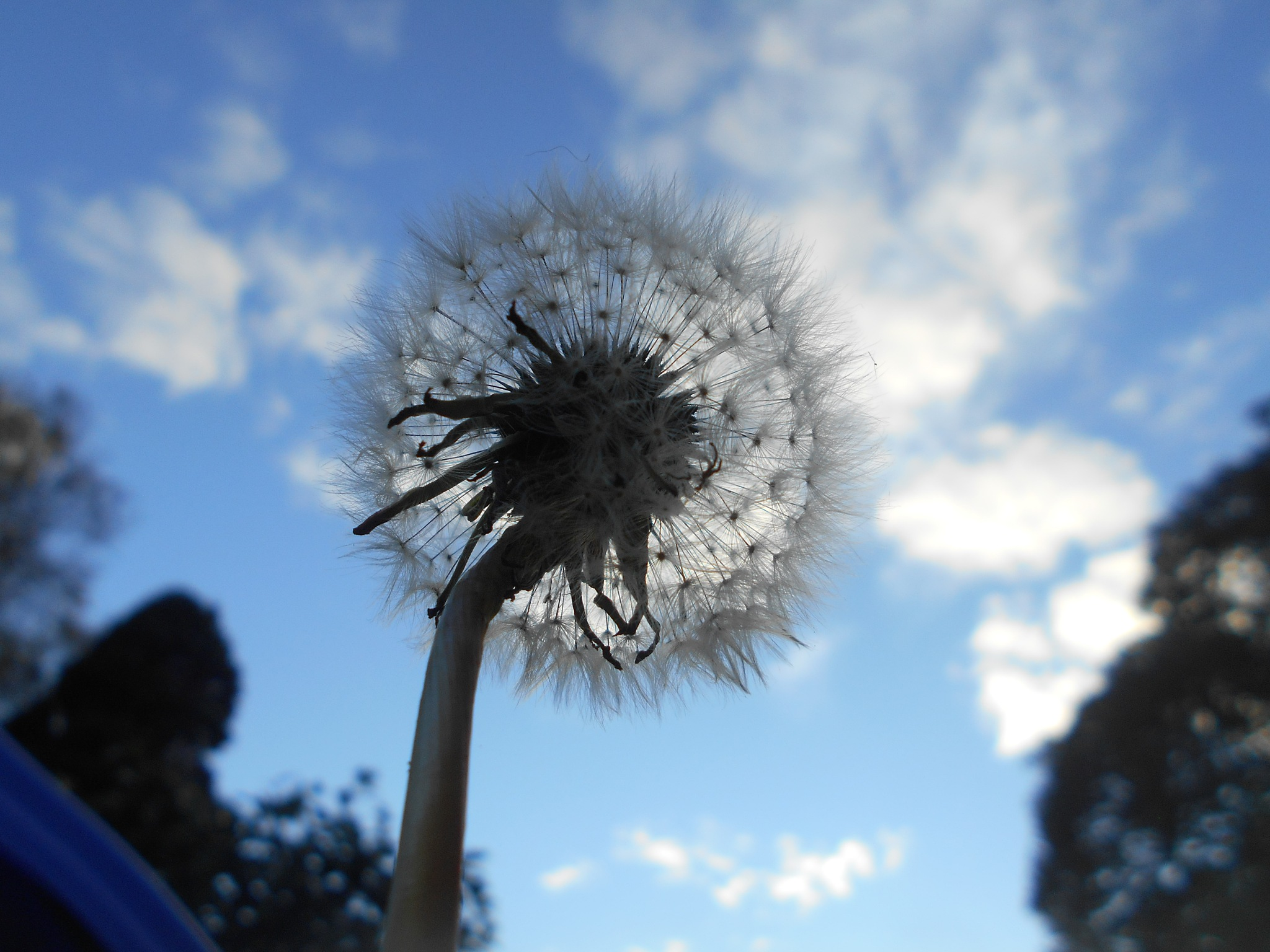 Looking up through a Dandelion seed. by bestwick.annette
