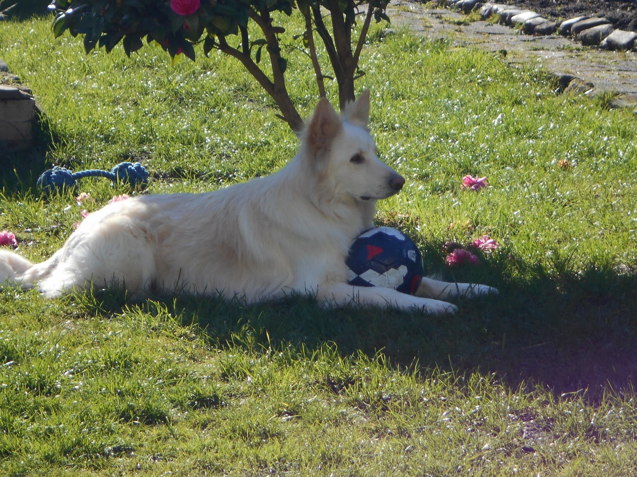 Ghost and his ball. by bestwick.annette