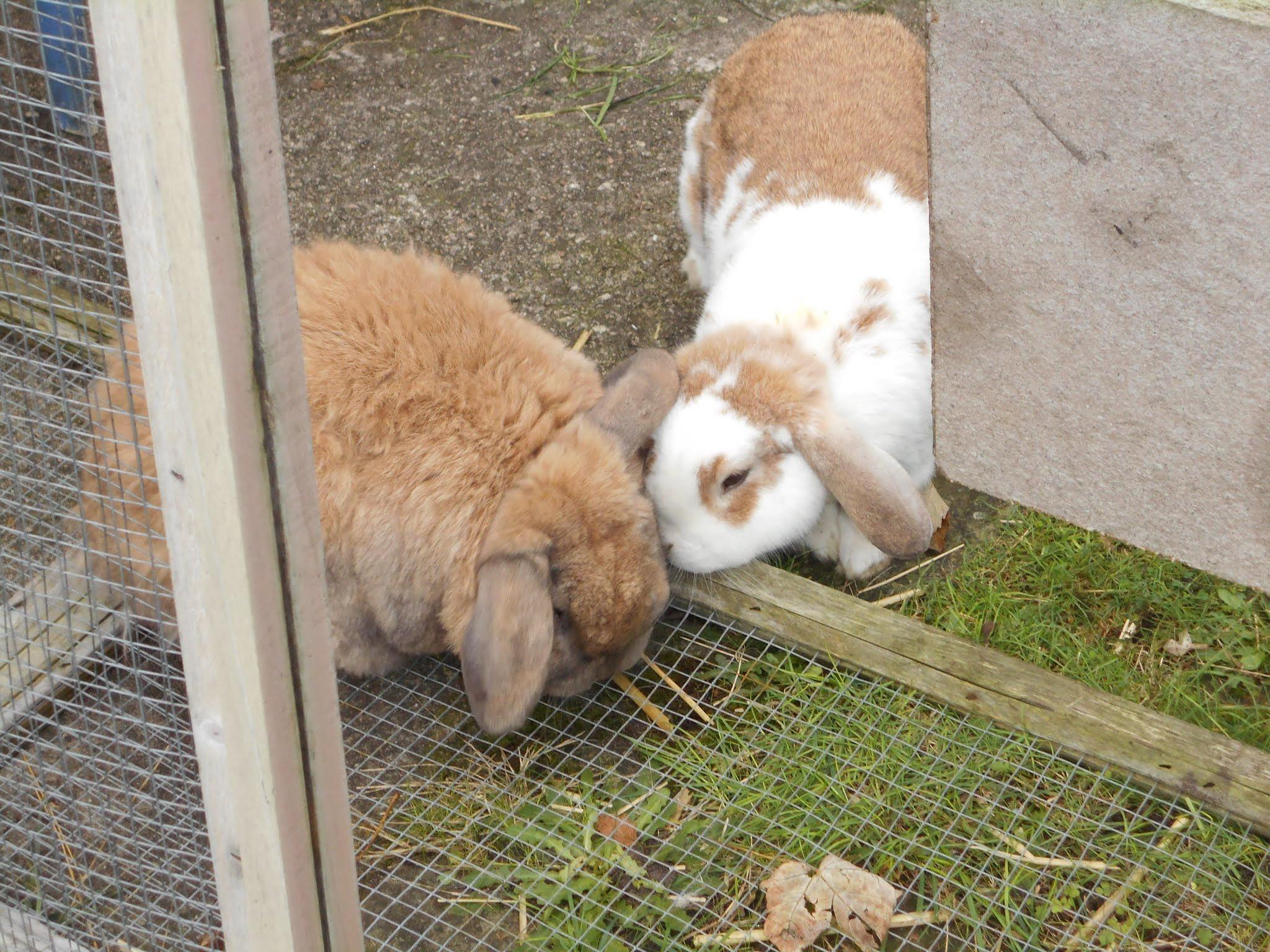 Smooching bunnies. by bestwick.annette