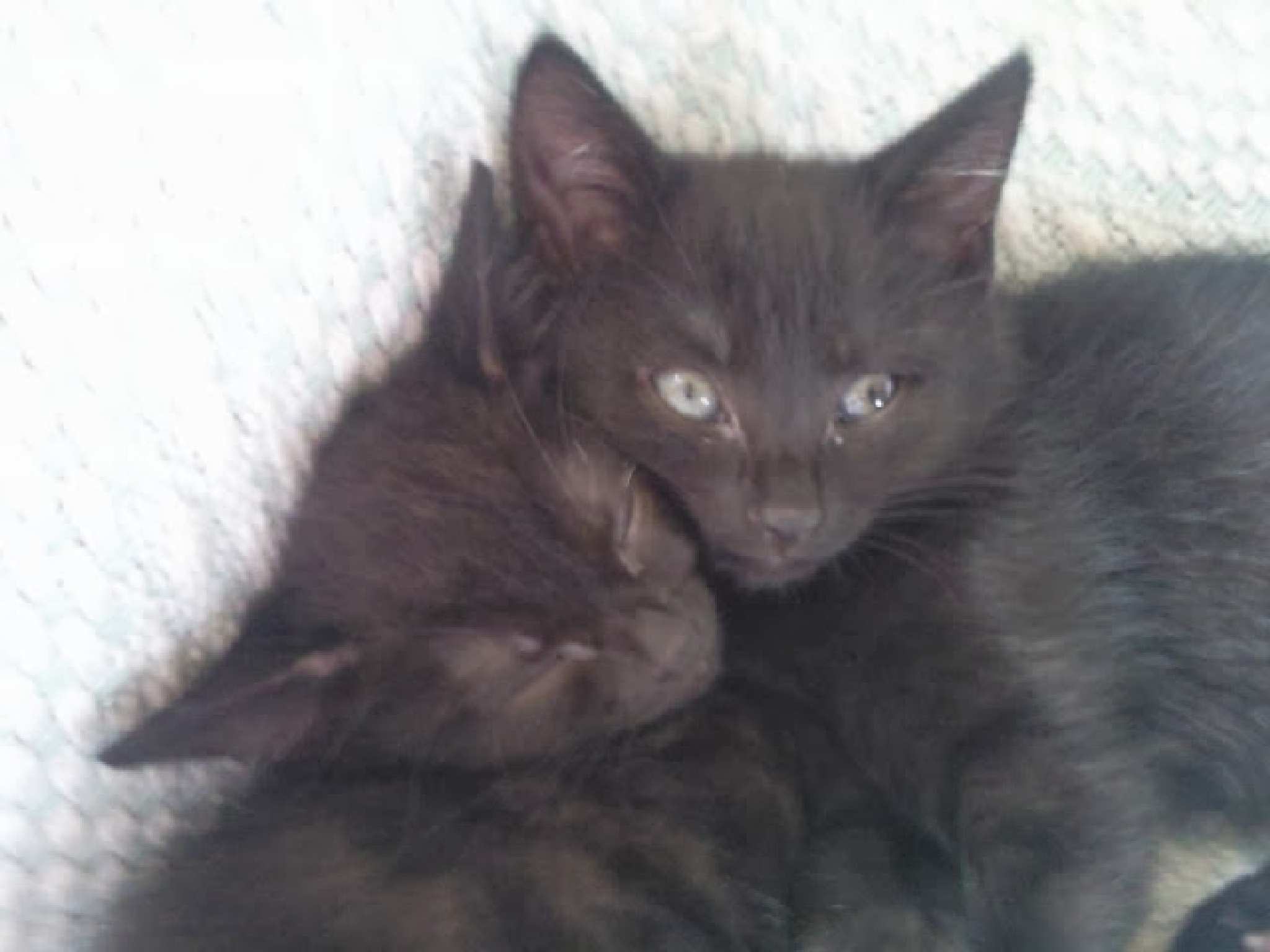 Twins are cute 2. by bestwick.annette
