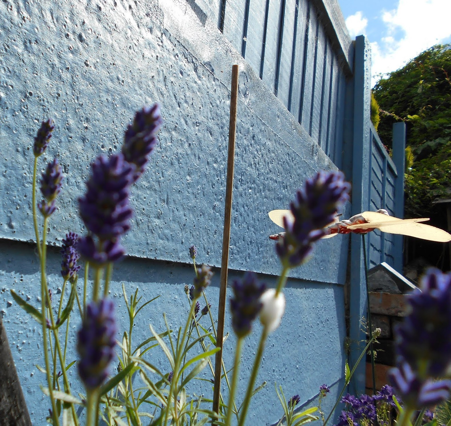 Lavender against fence. by bestwick.annette