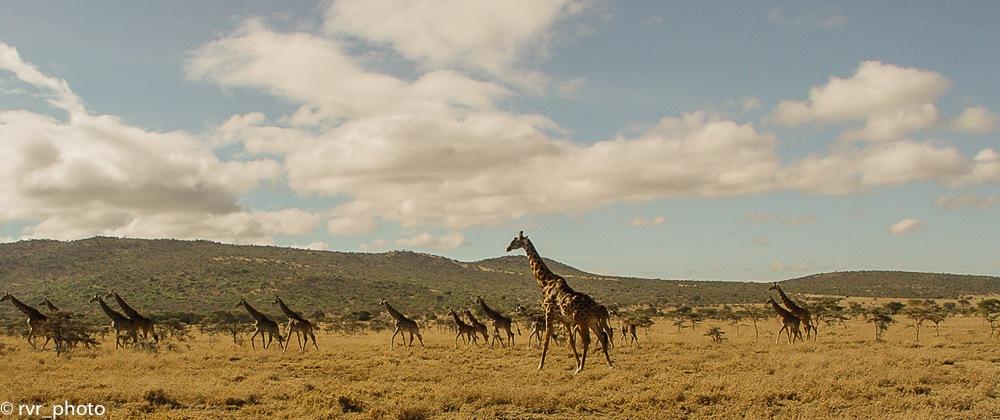 Savannah of Kenya by Rafael