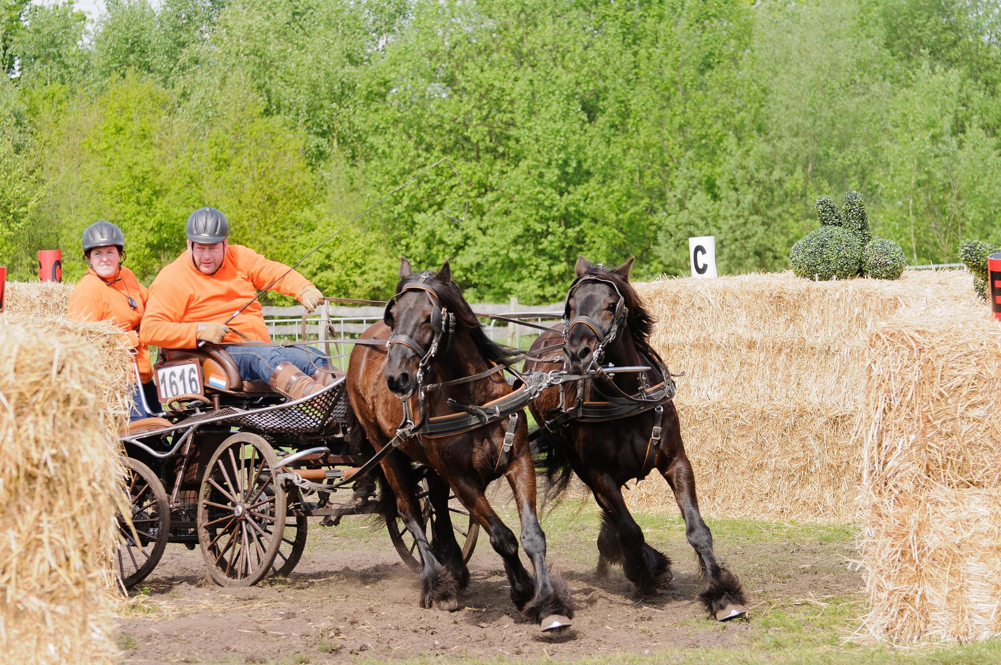 Horses Days by h.vanderzanden