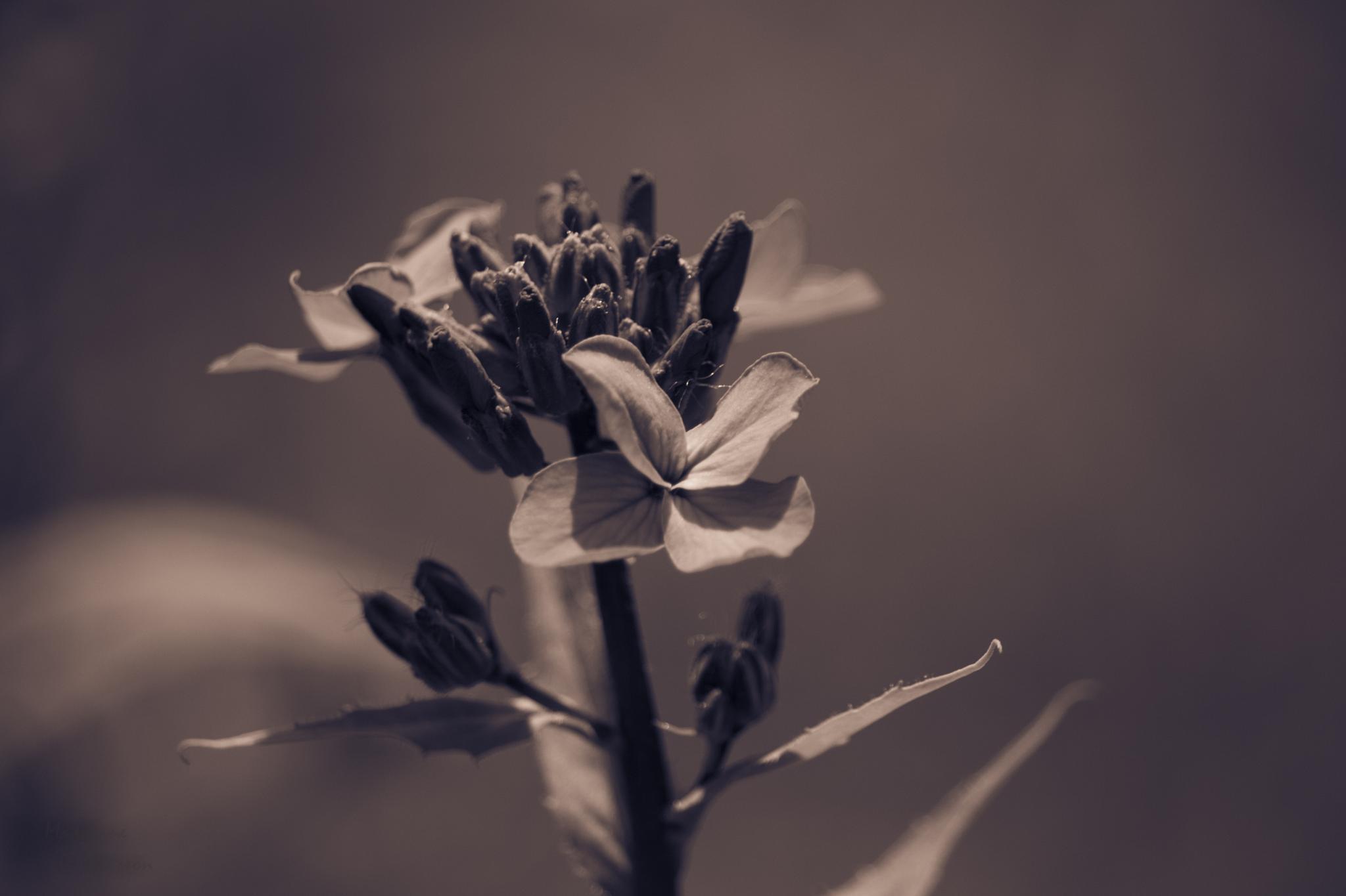 Flower by Madeleine Nilsson