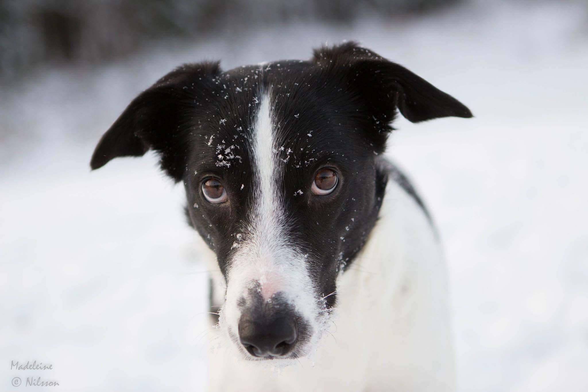 Photo in Random #winter #dog #snow