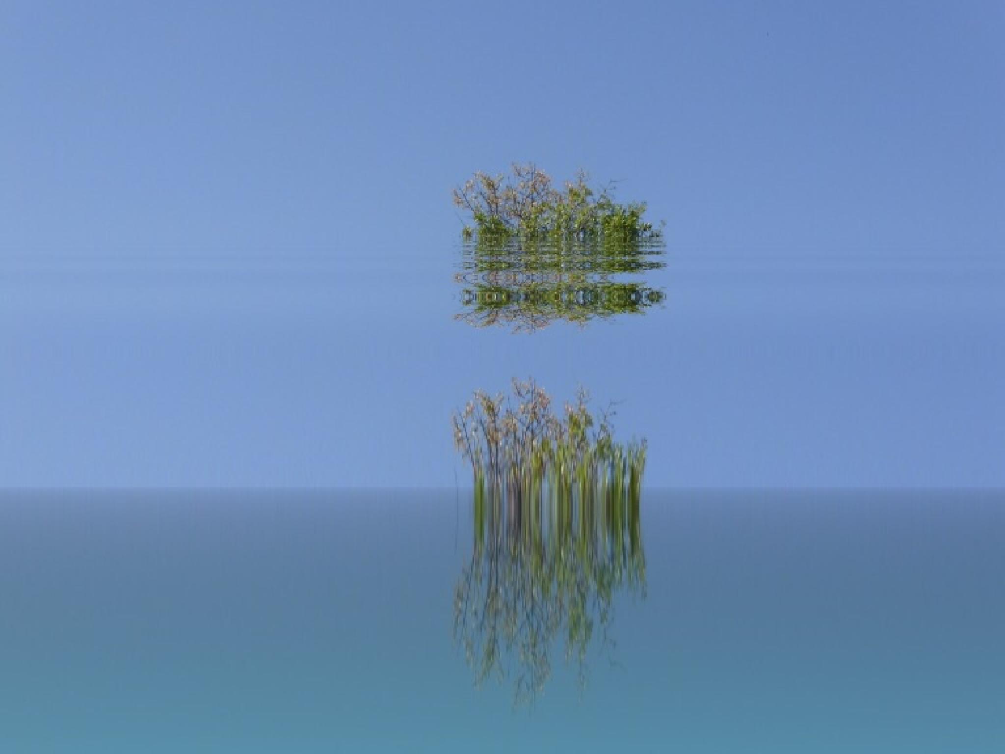 Floating bush by mirella.barteloni