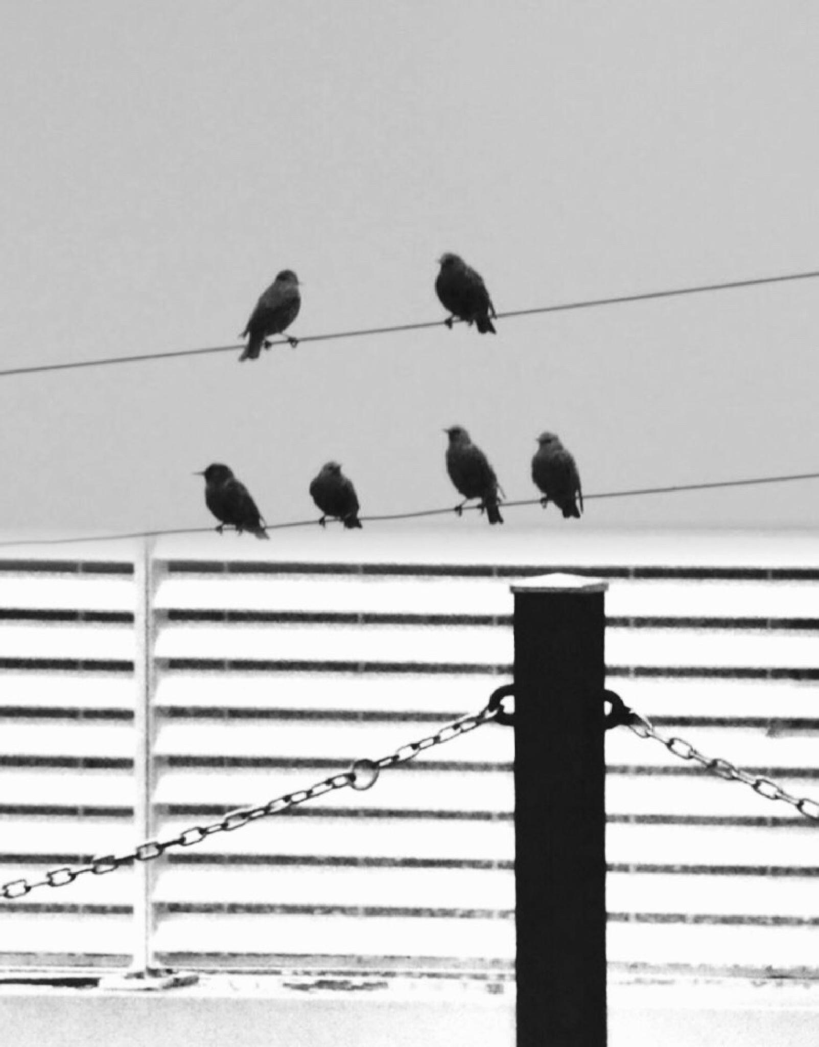 Birds in a foggy day by mirella.barteloni