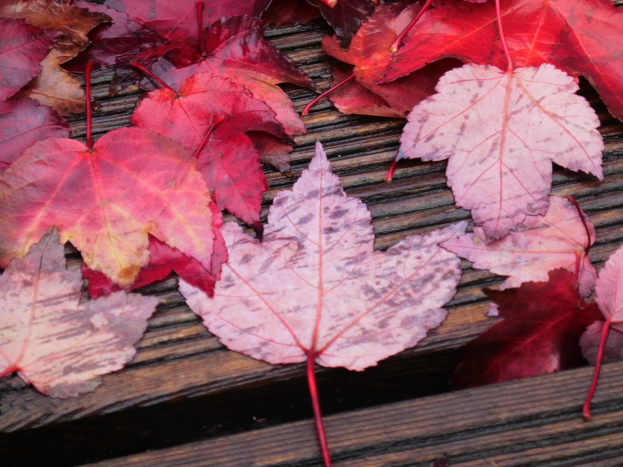 Foliage by mirella.barteloni