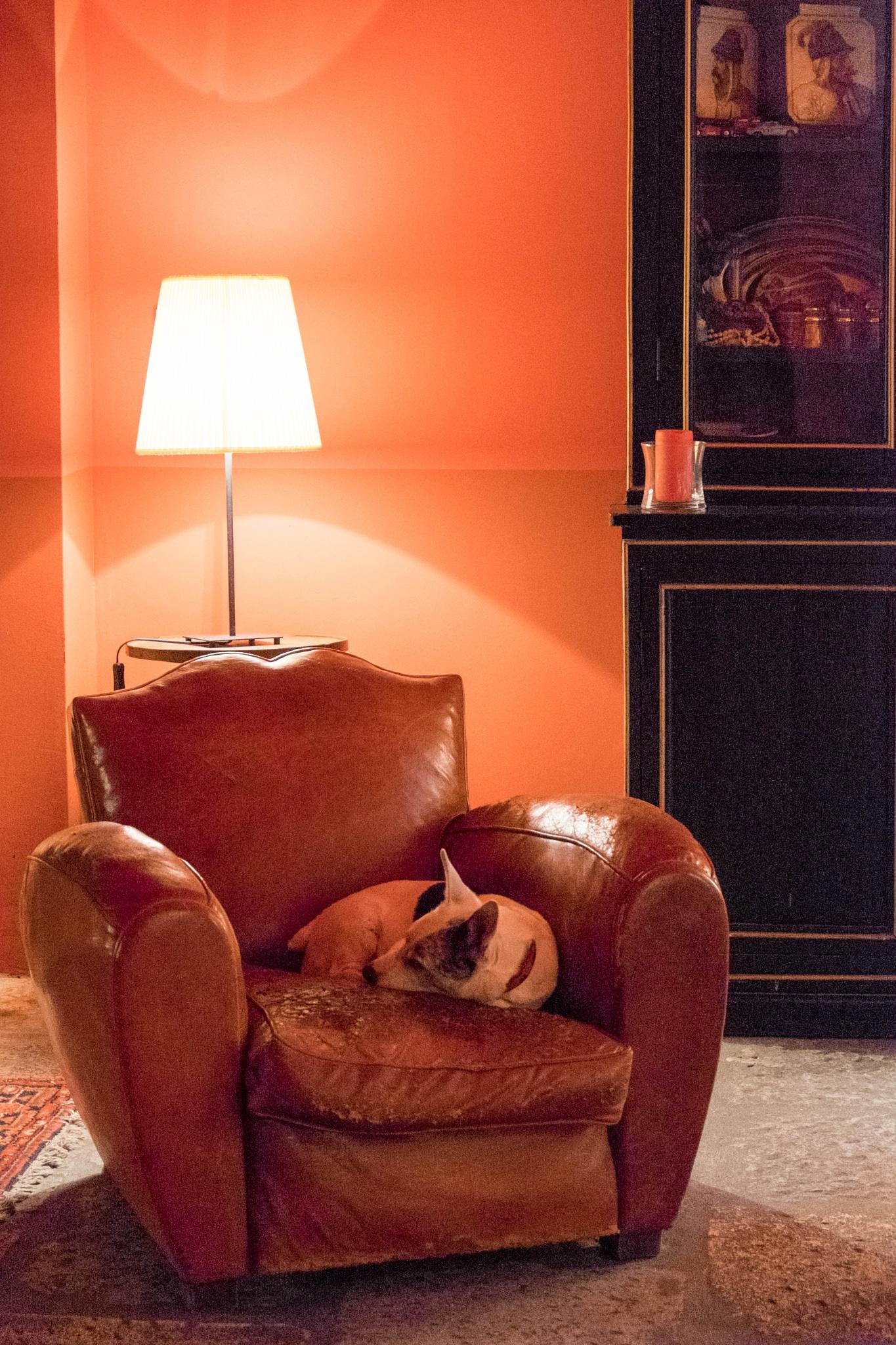 le repos du vieux chien raoul by bcorech