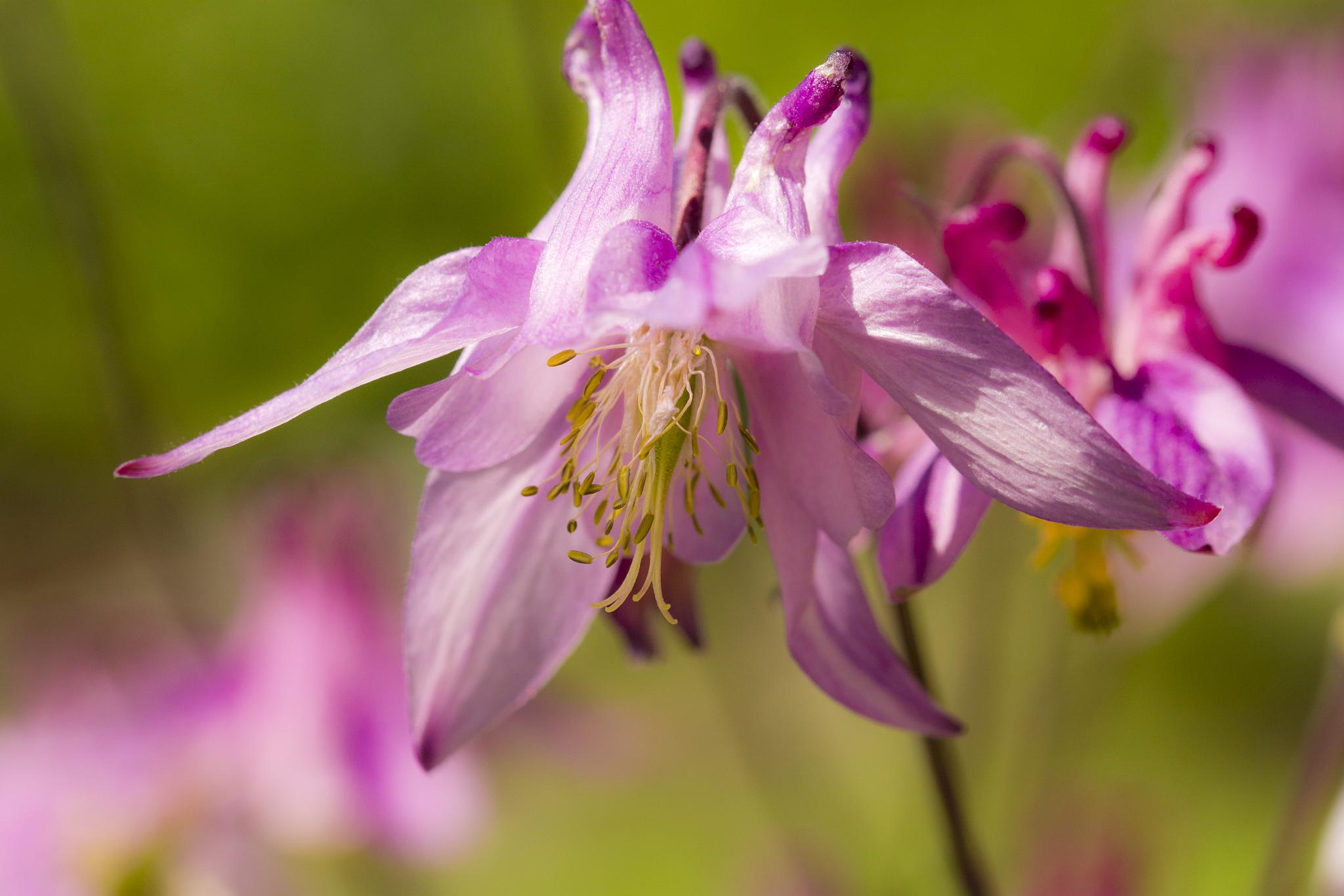 Dreamy lilac by sandra.hallenberg