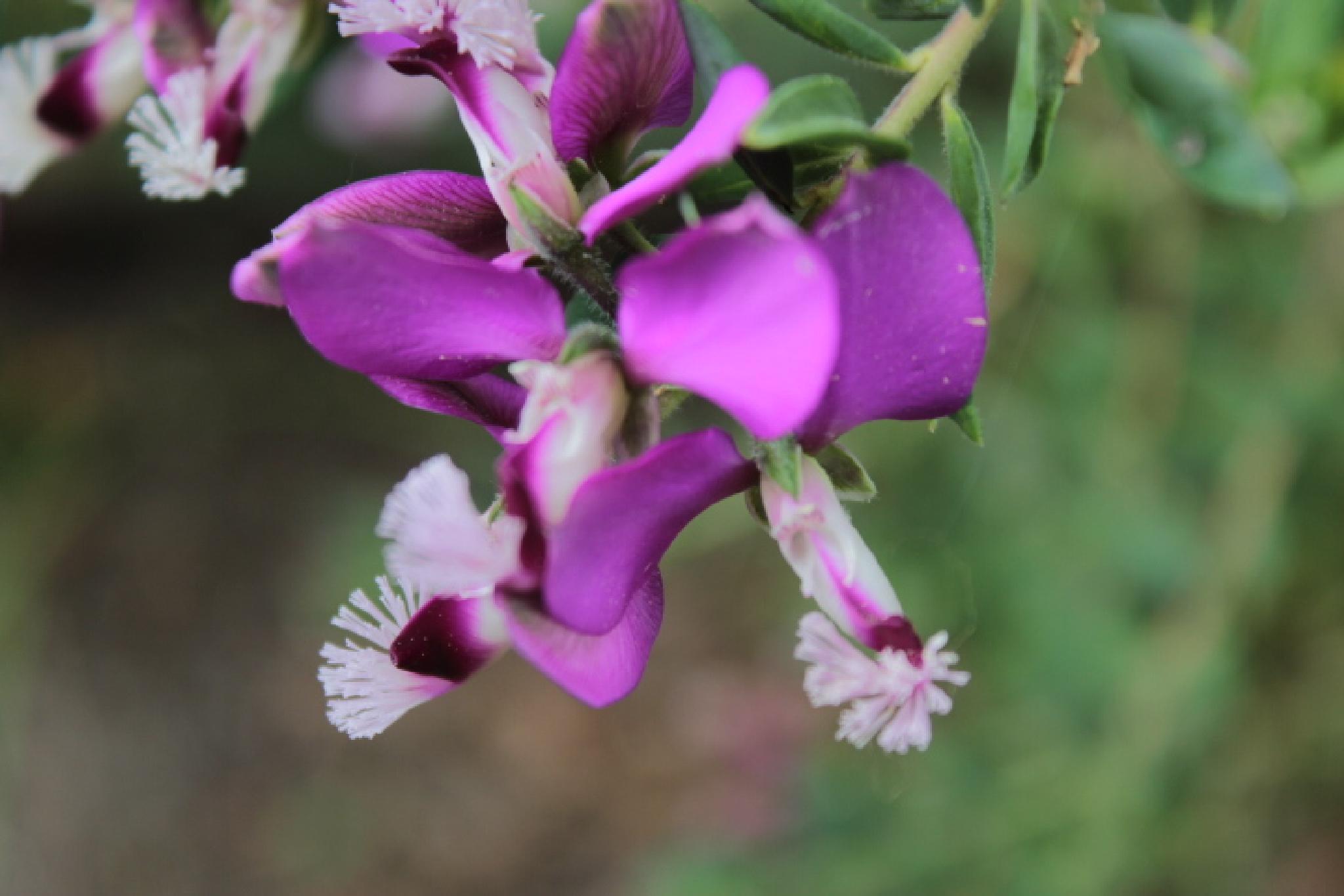 Sweet Pea Bush (3) by Enchanted Seashells by Princess Rosebud