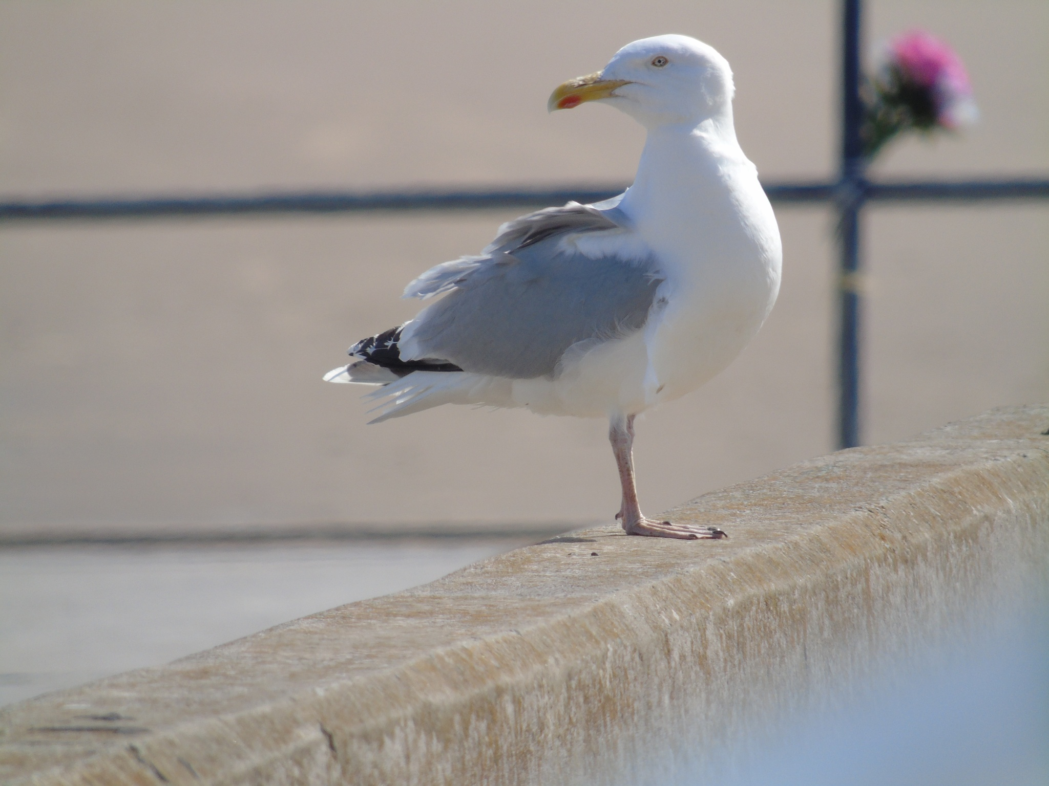 Photo in Animal #birds #seafront