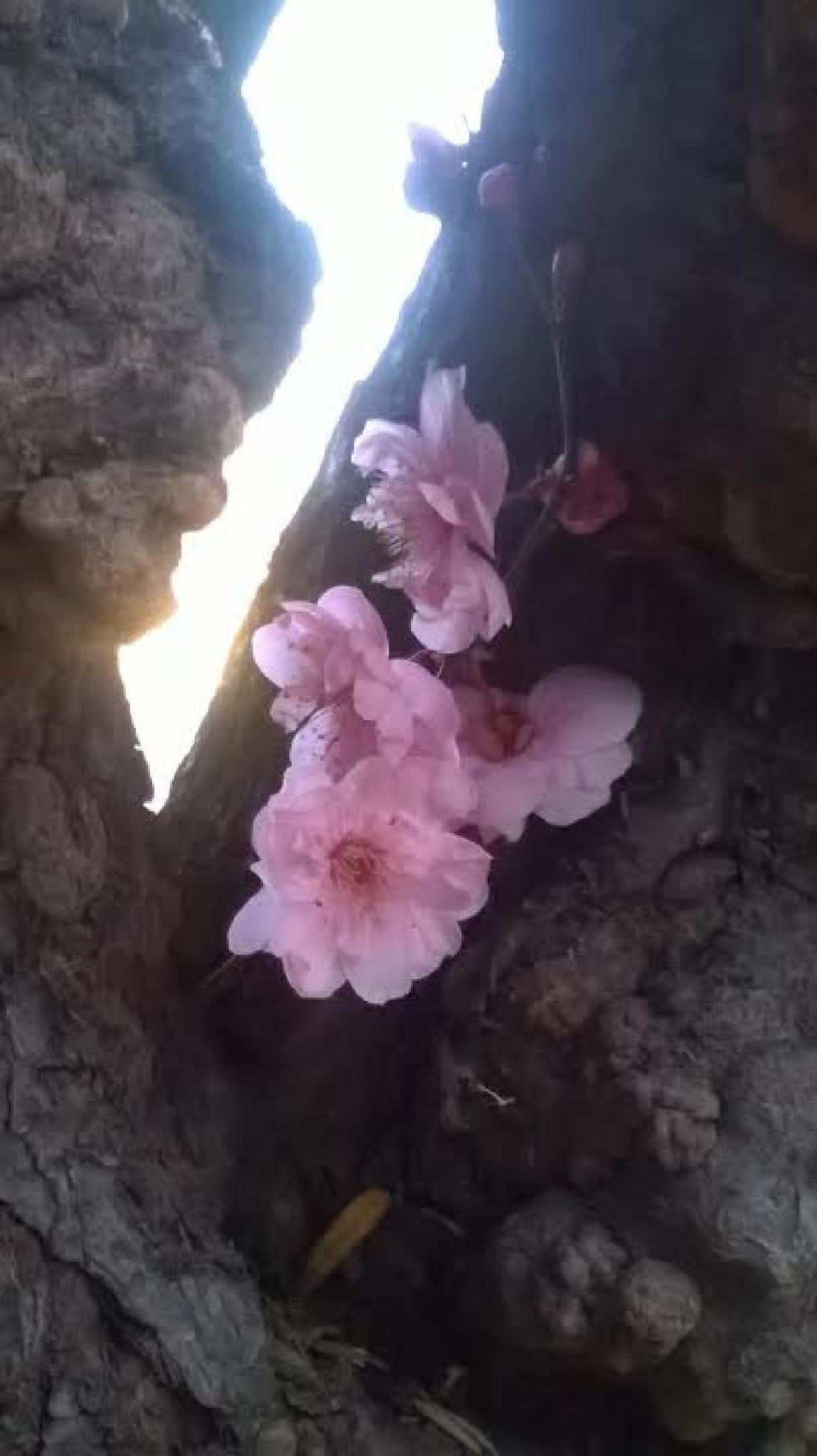 Japanese Plum Tree 5 by Jo Ann M. Thompson