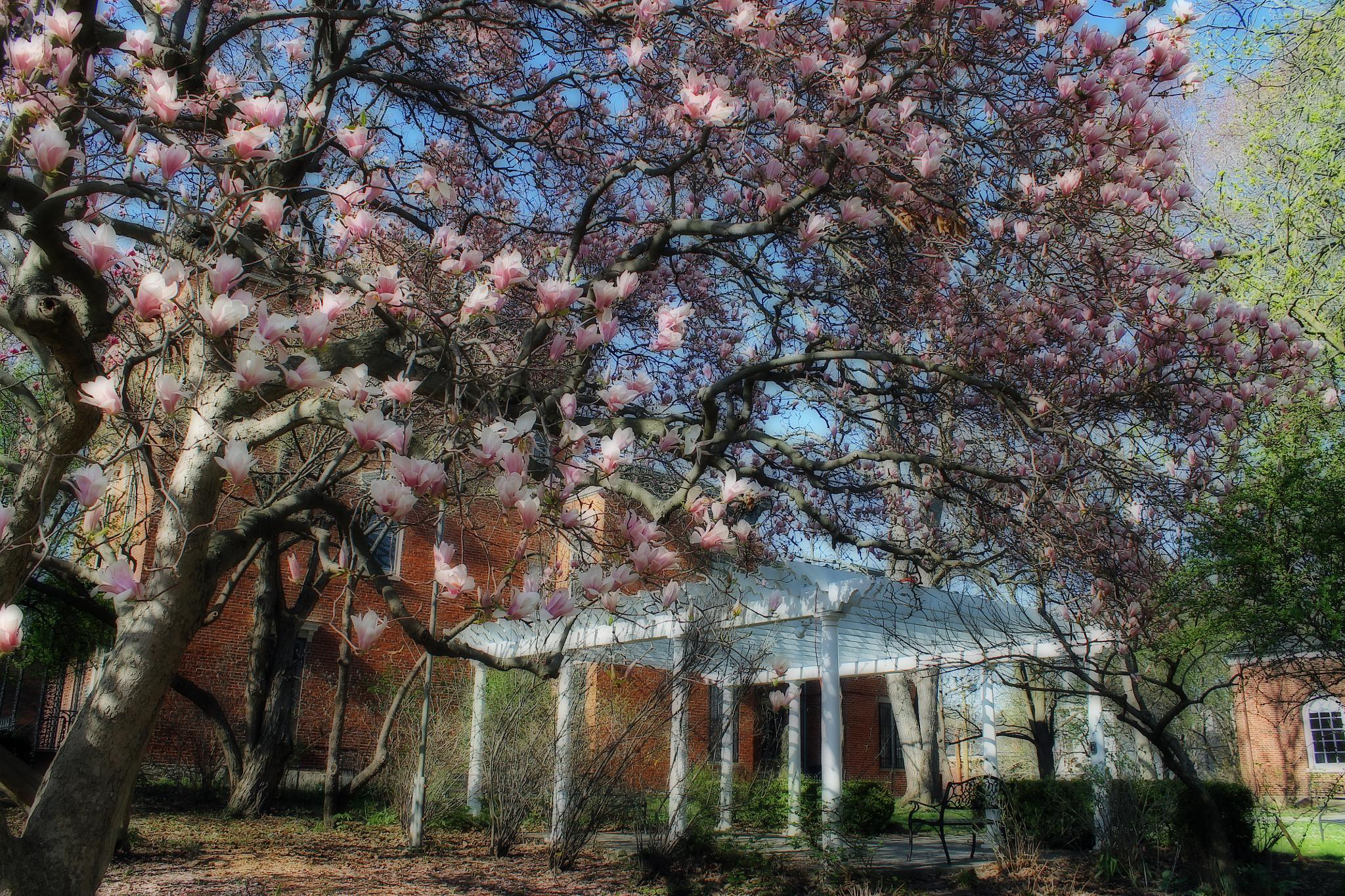 Magnolia Afternoon by christinaMarieThomas Photography