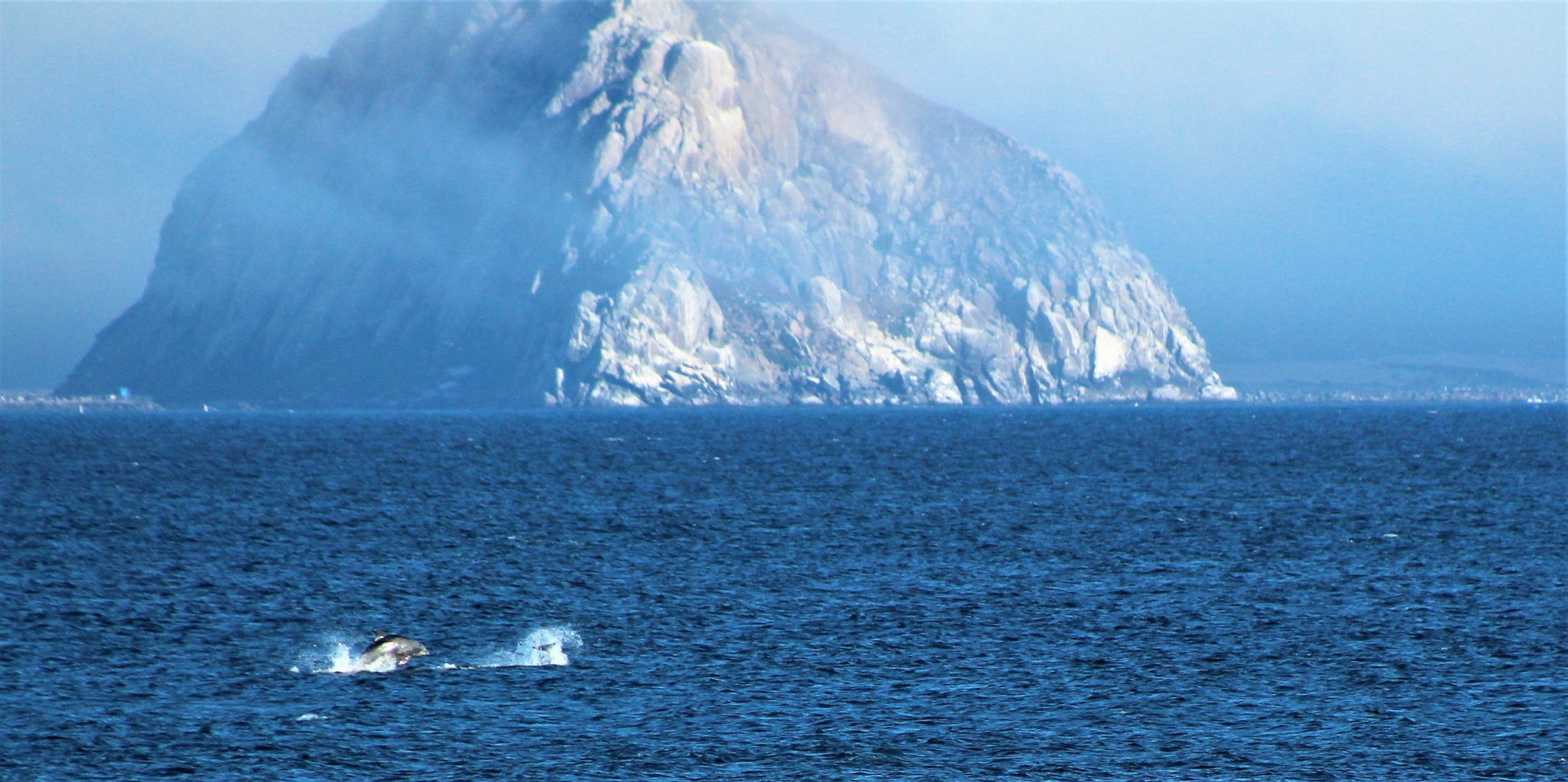 Morro Rock with Dolphins by T.Neil Walker