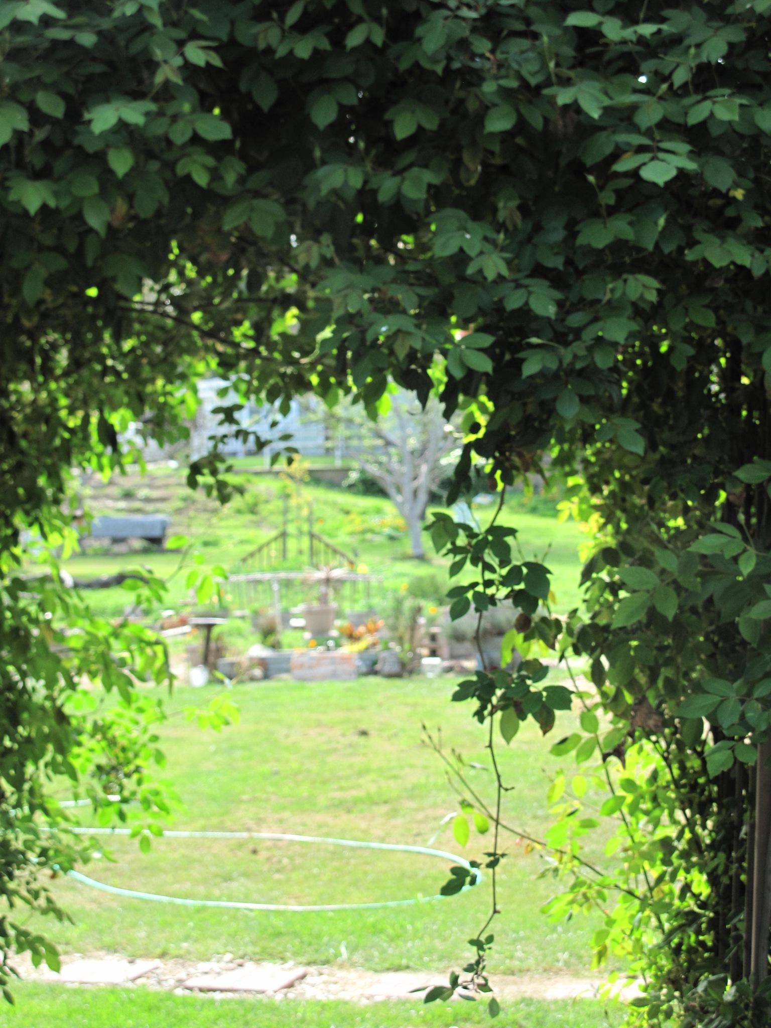 My Yard by T.Neil Walker