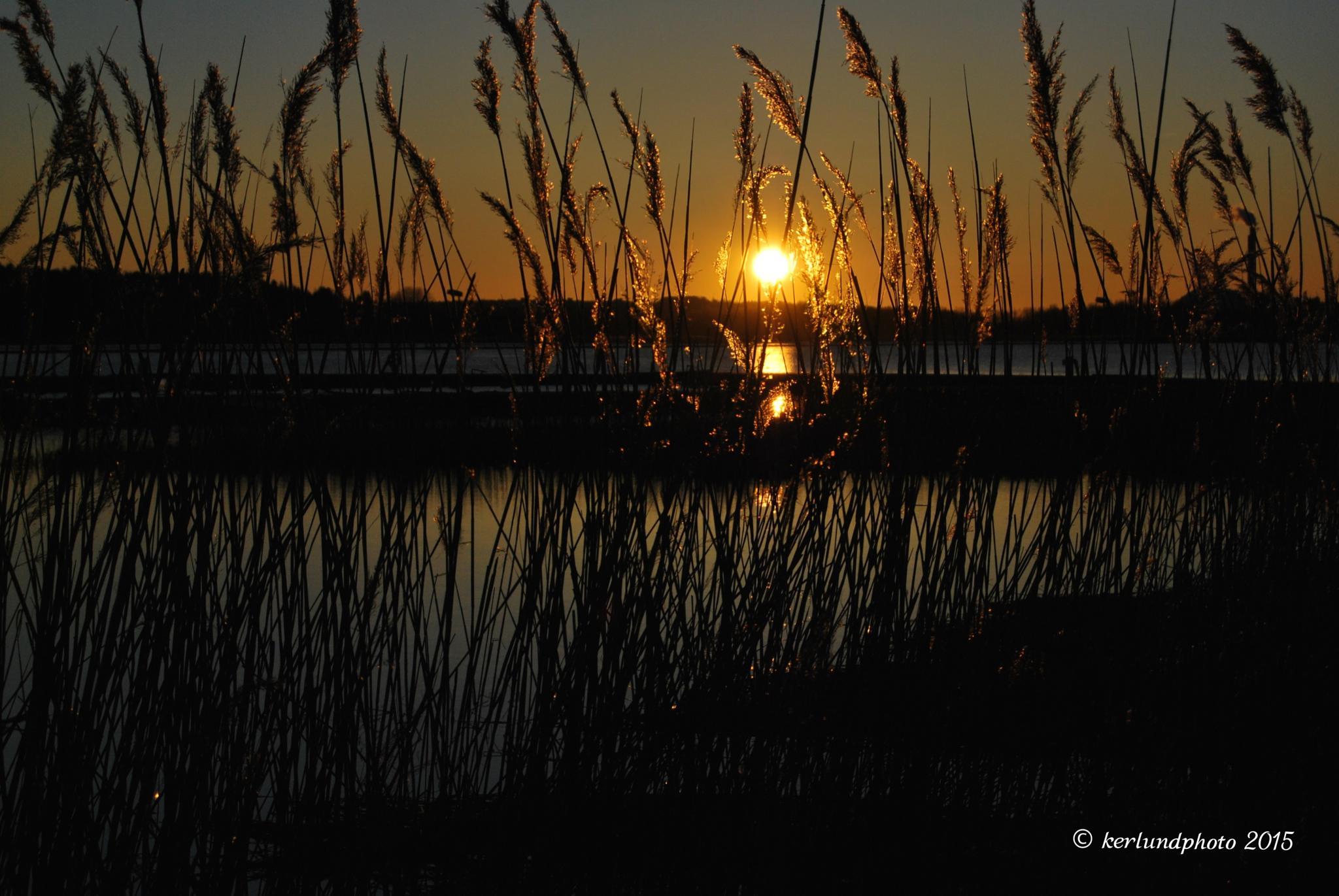 Evening sun by Kerlundphoto