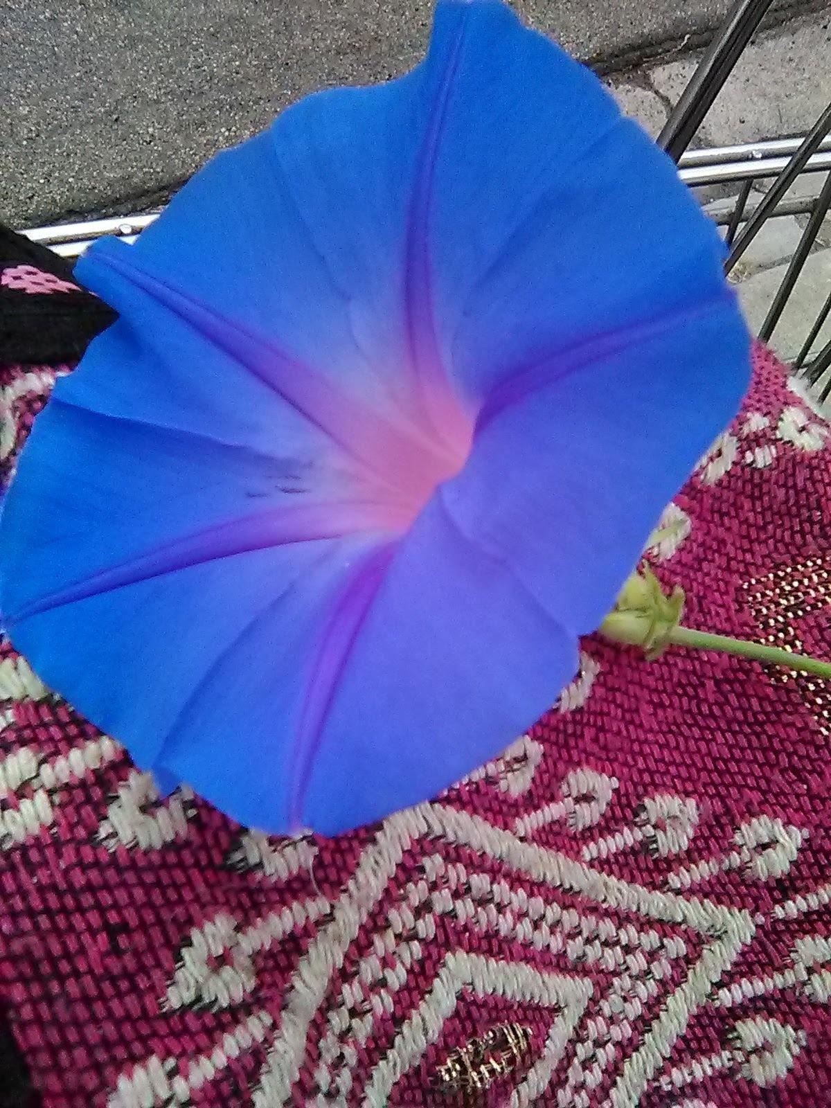 Strange Blue glowing flower by Monica Gregory