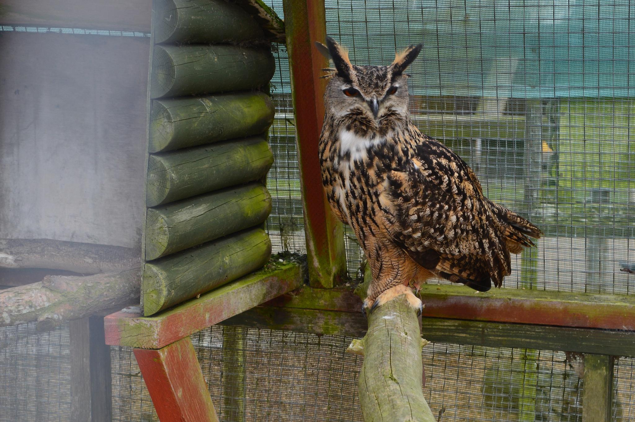 Owl by Paul Richardson