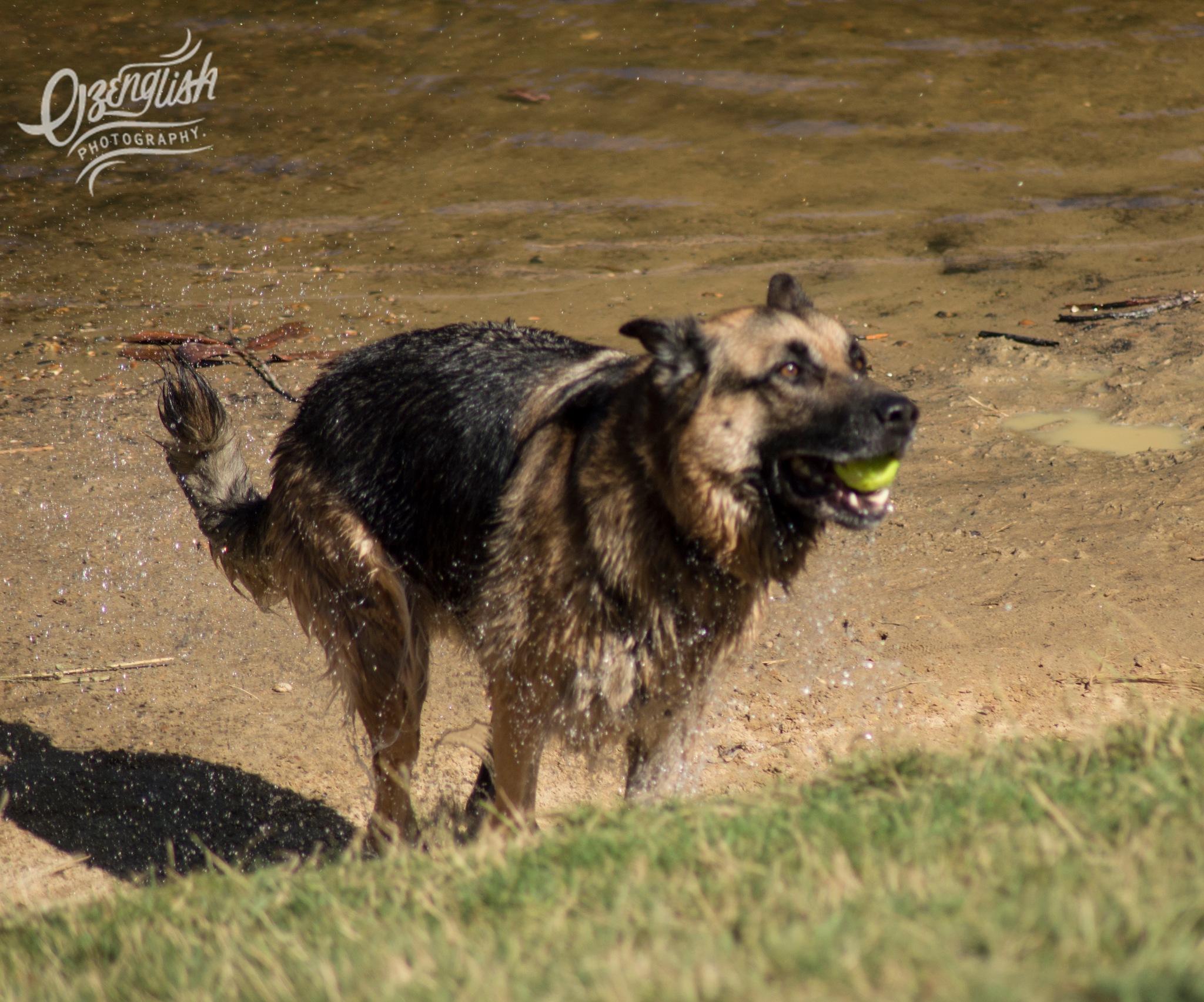 Happy Doggy!! by Jim Smith