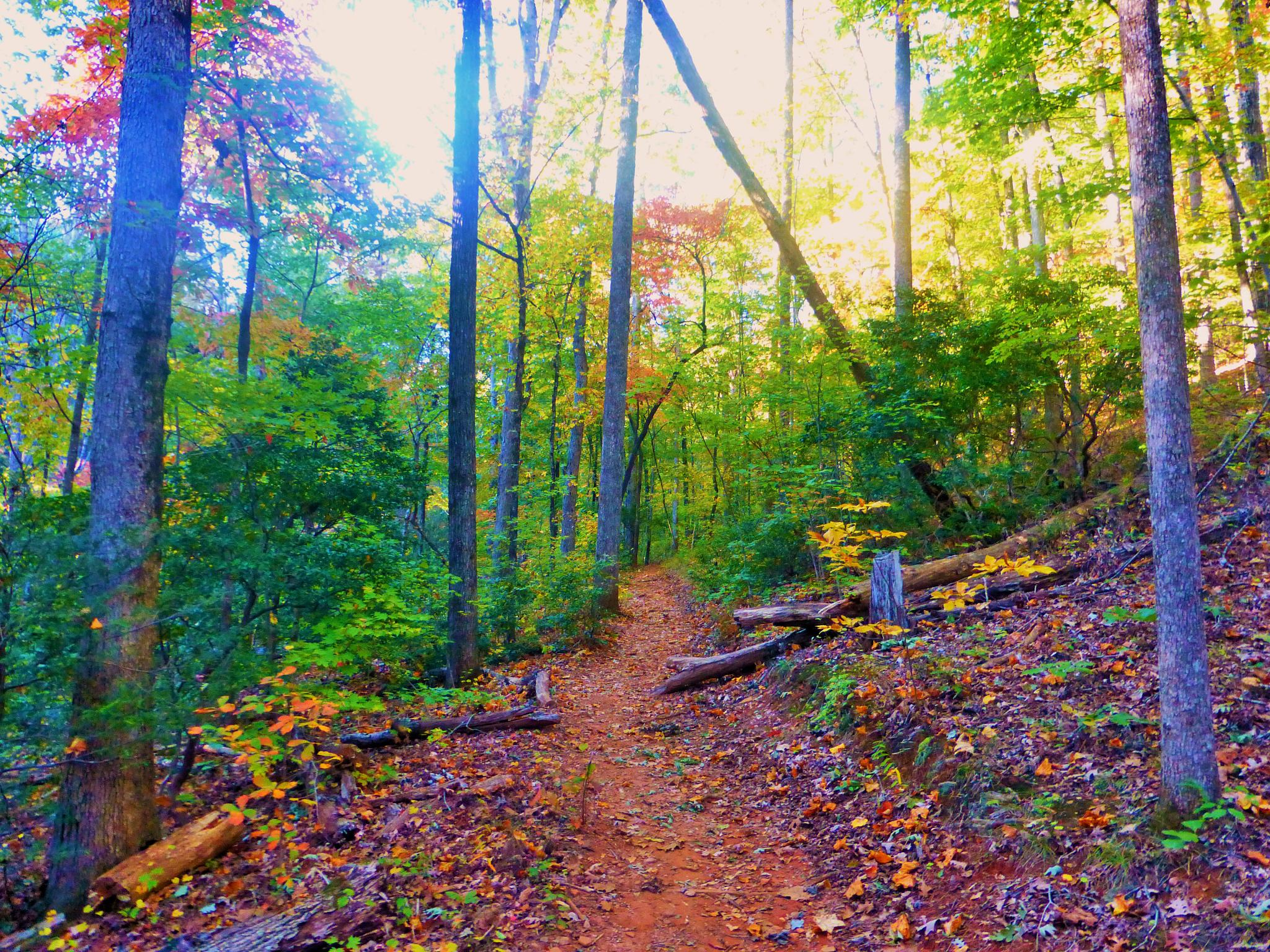 trail at paris mountain by NiceOne