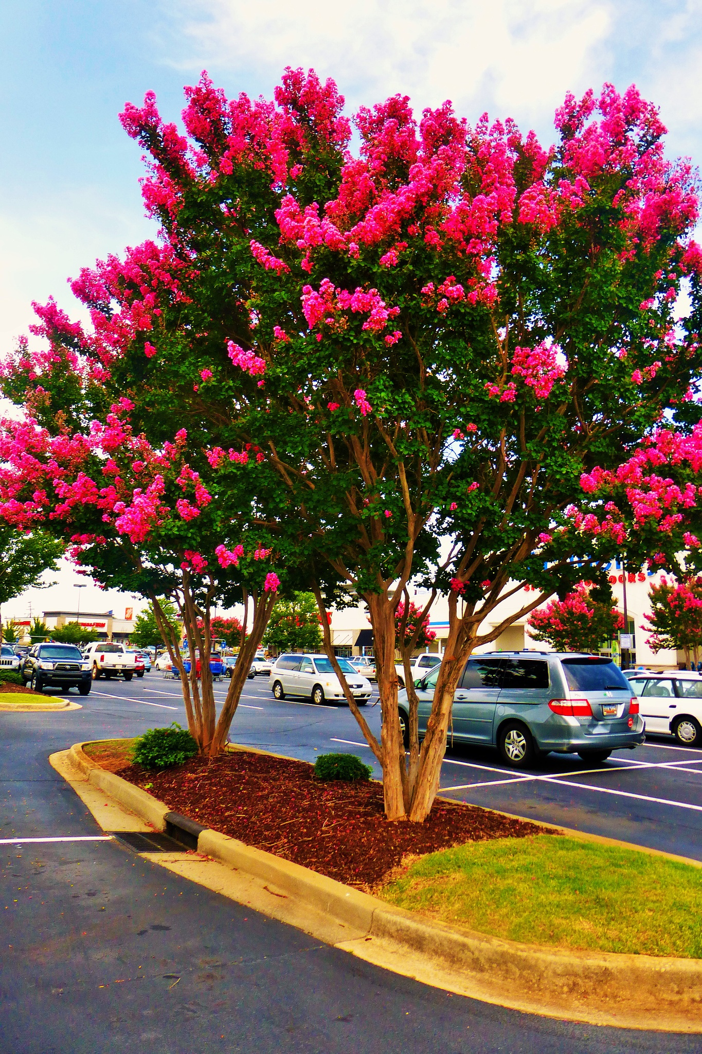 parking lot tree by NiceOne