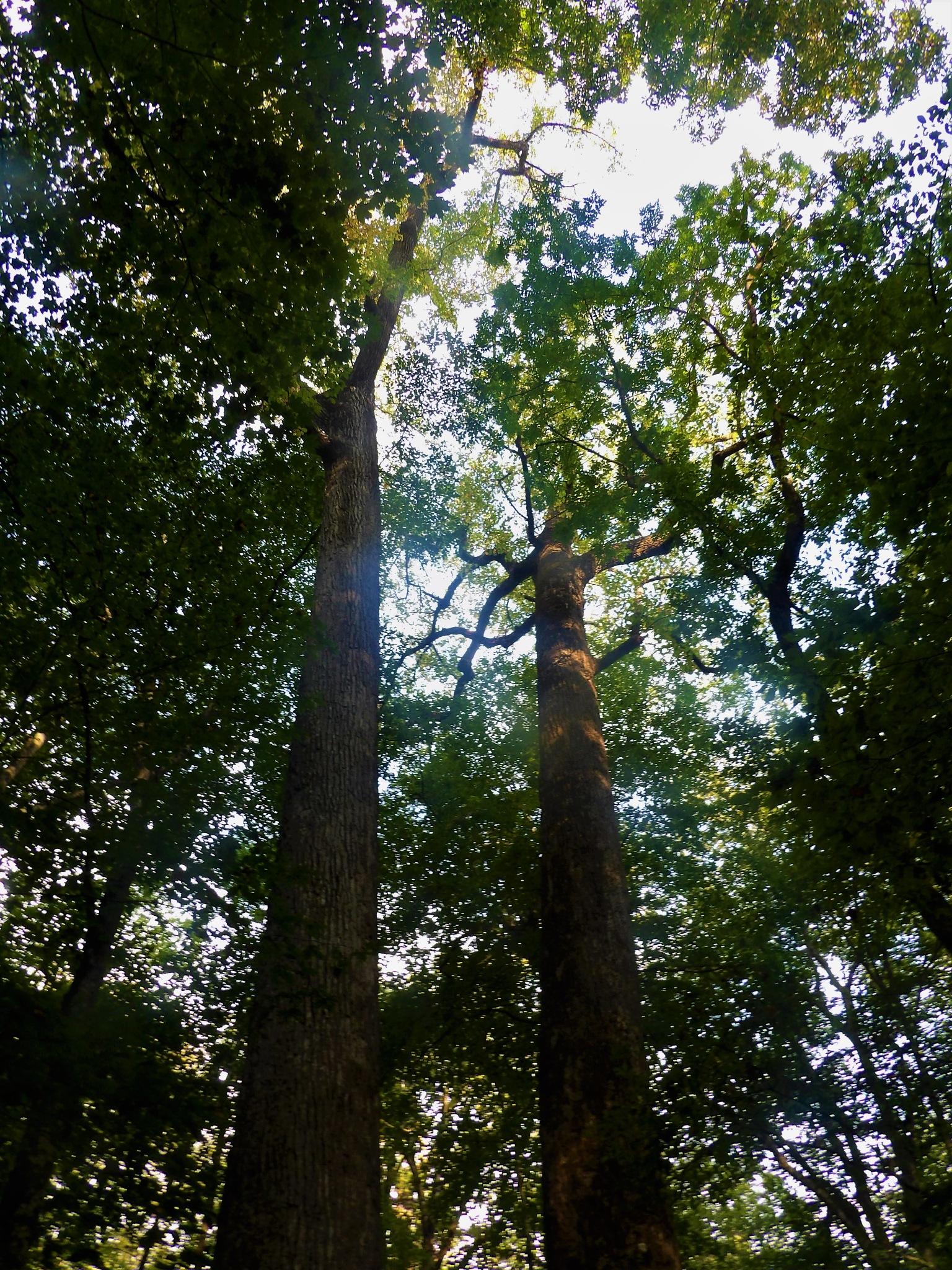 Joyce Kilmer Forest by NiceOne