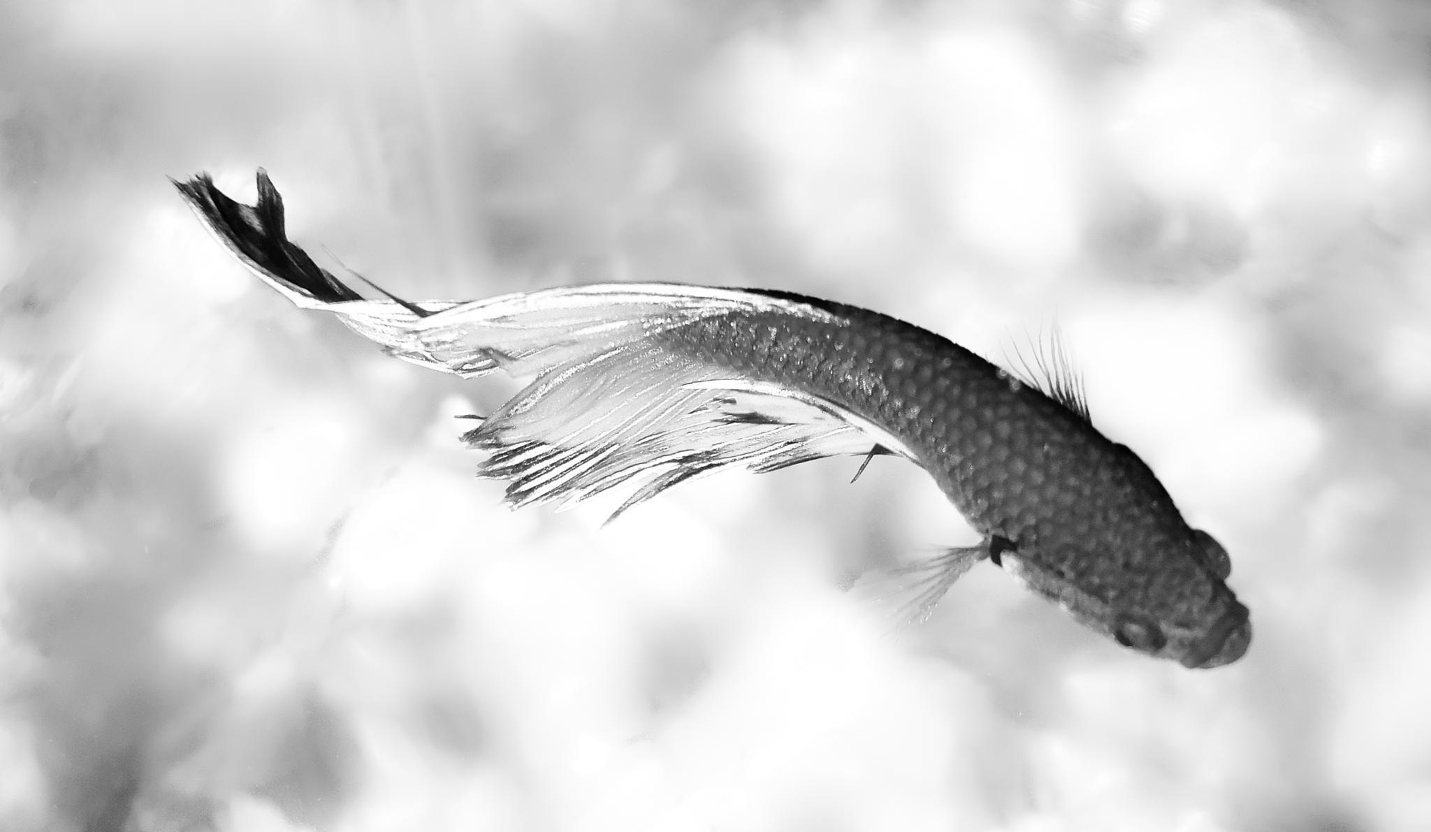 Fish by Akash Dey