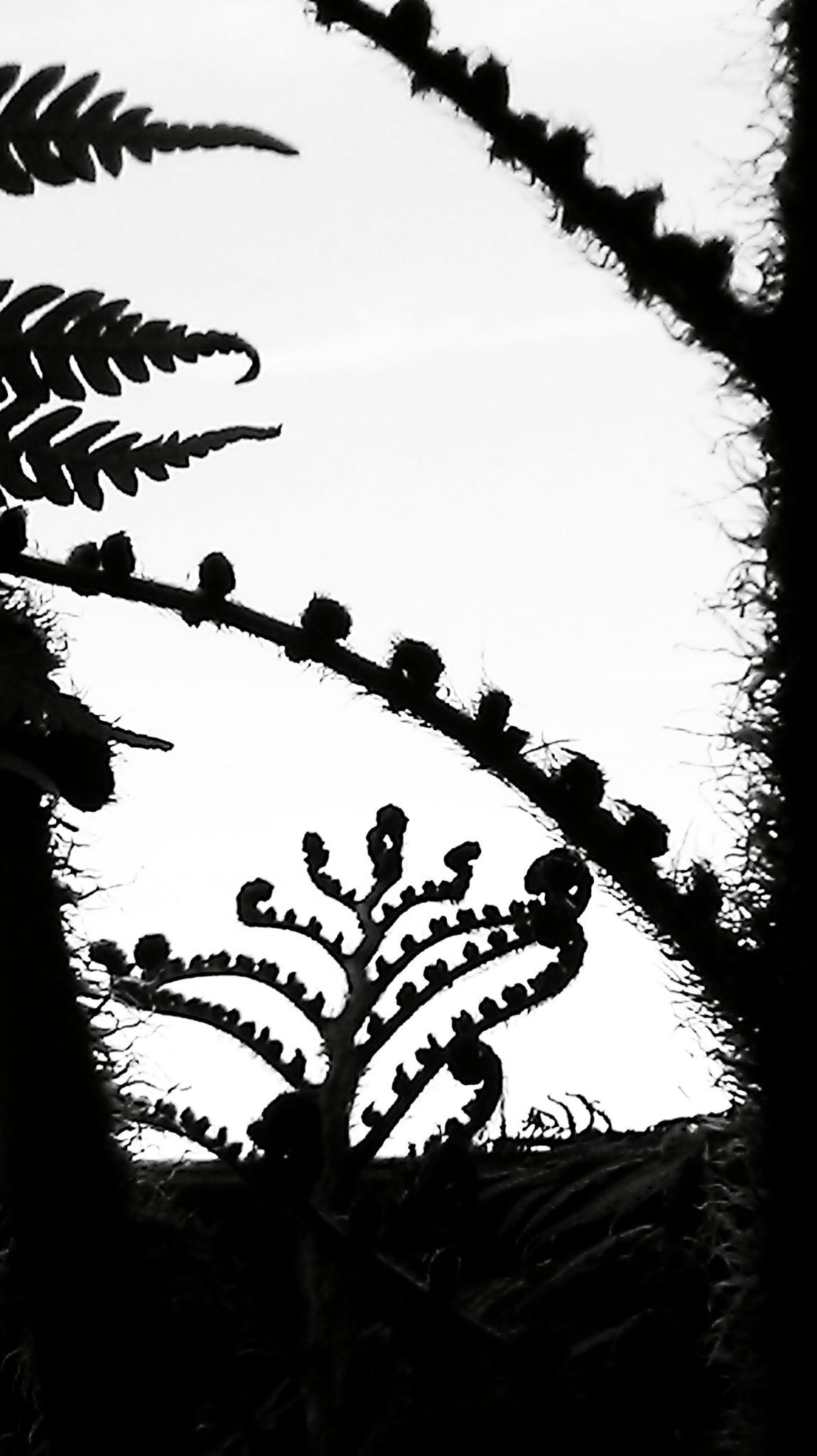 Growing by rhonda.j.lewis