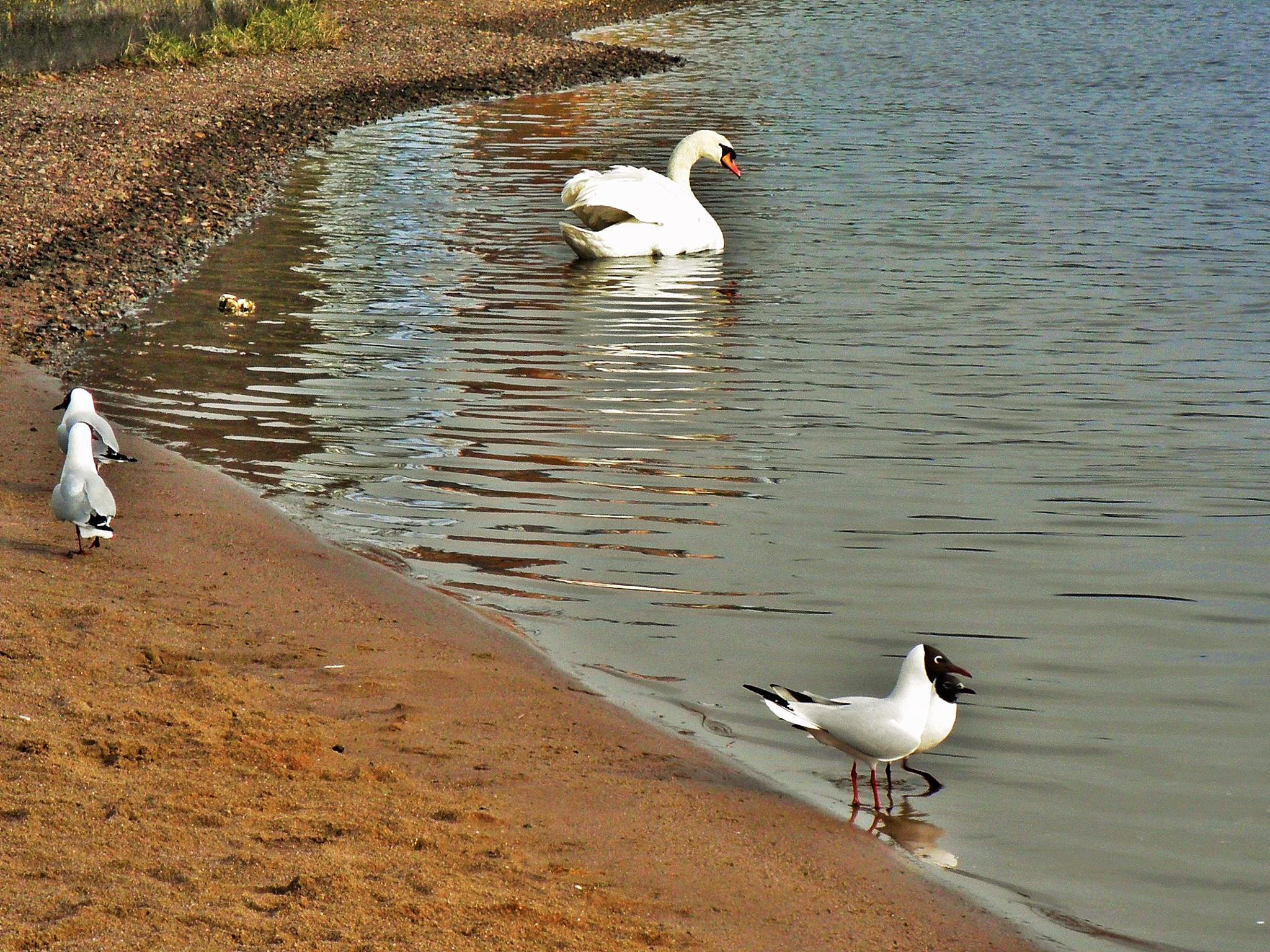 Birds having a paddle by miket