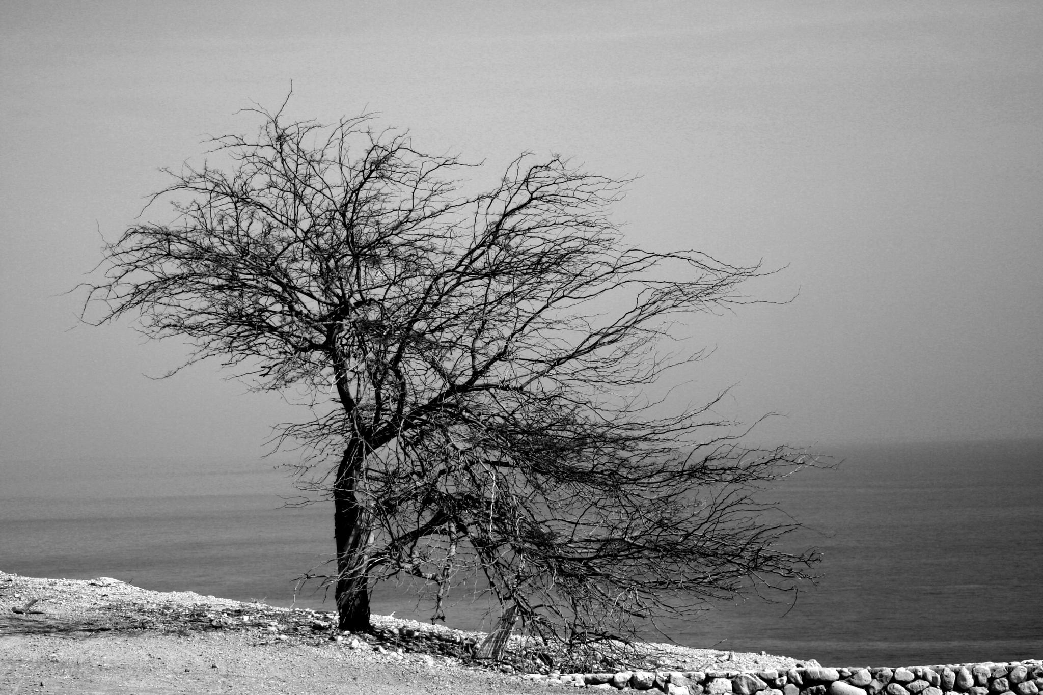 Lonely by Nikolay Tatarchuk