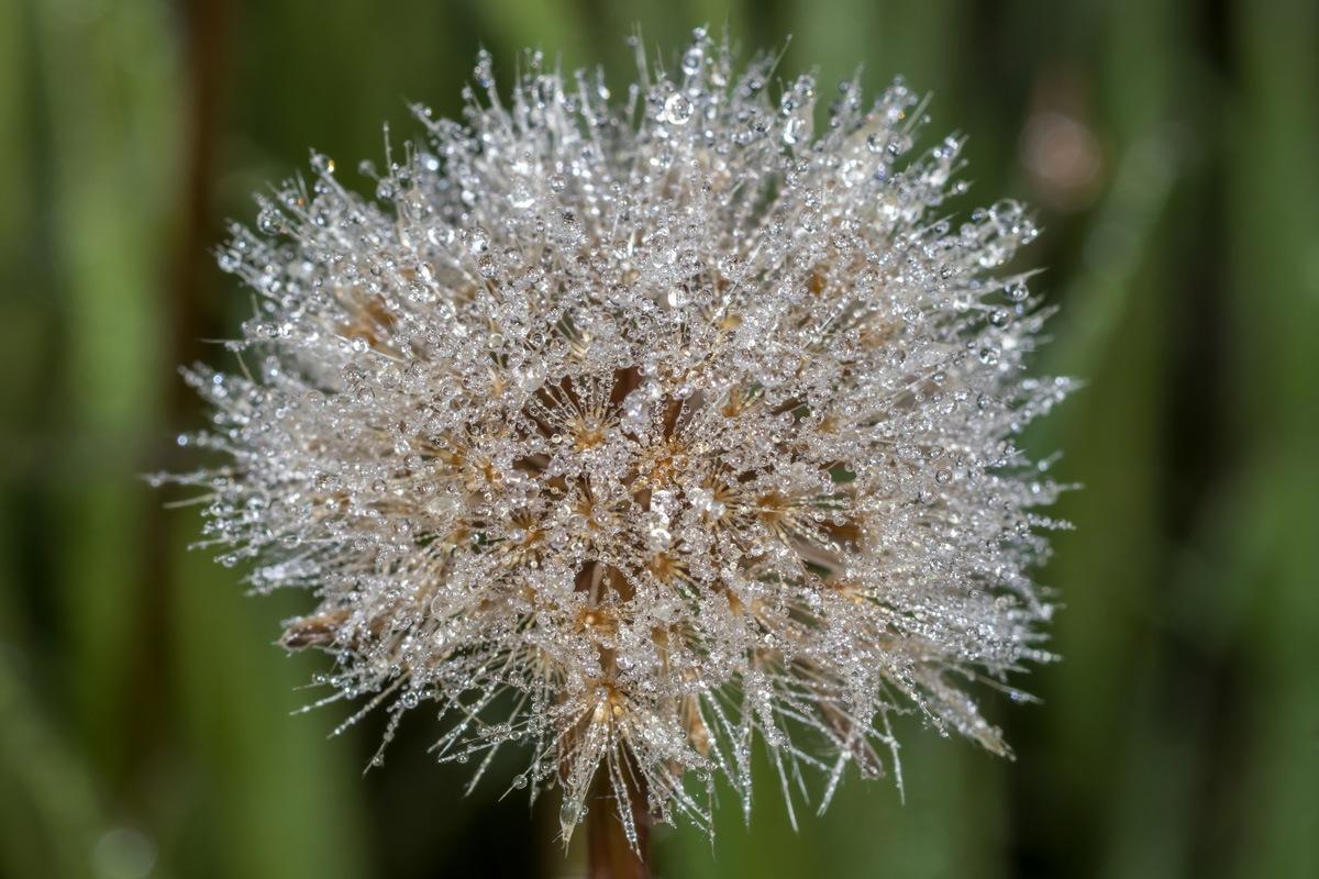 crystal flower by Nikolay Tatarchuk