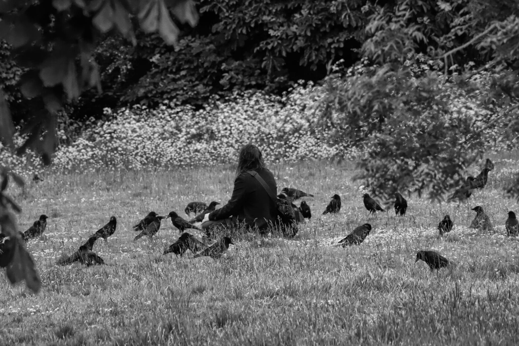 Crow Whisperer by Mark Winstanley