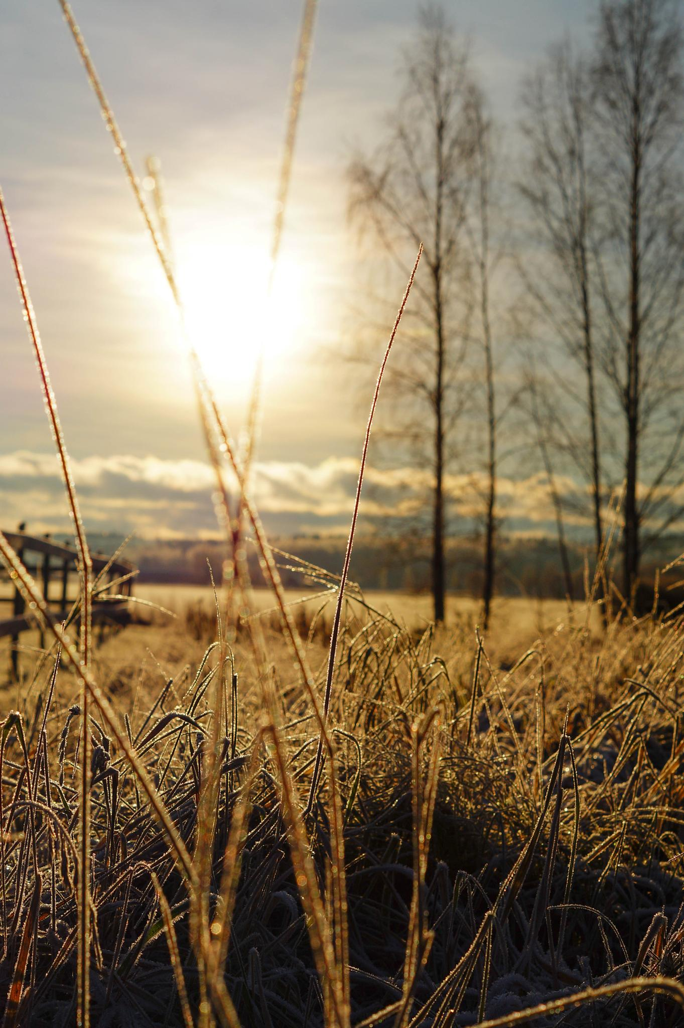 Warming sun on a cold day by Andreas Håkansson