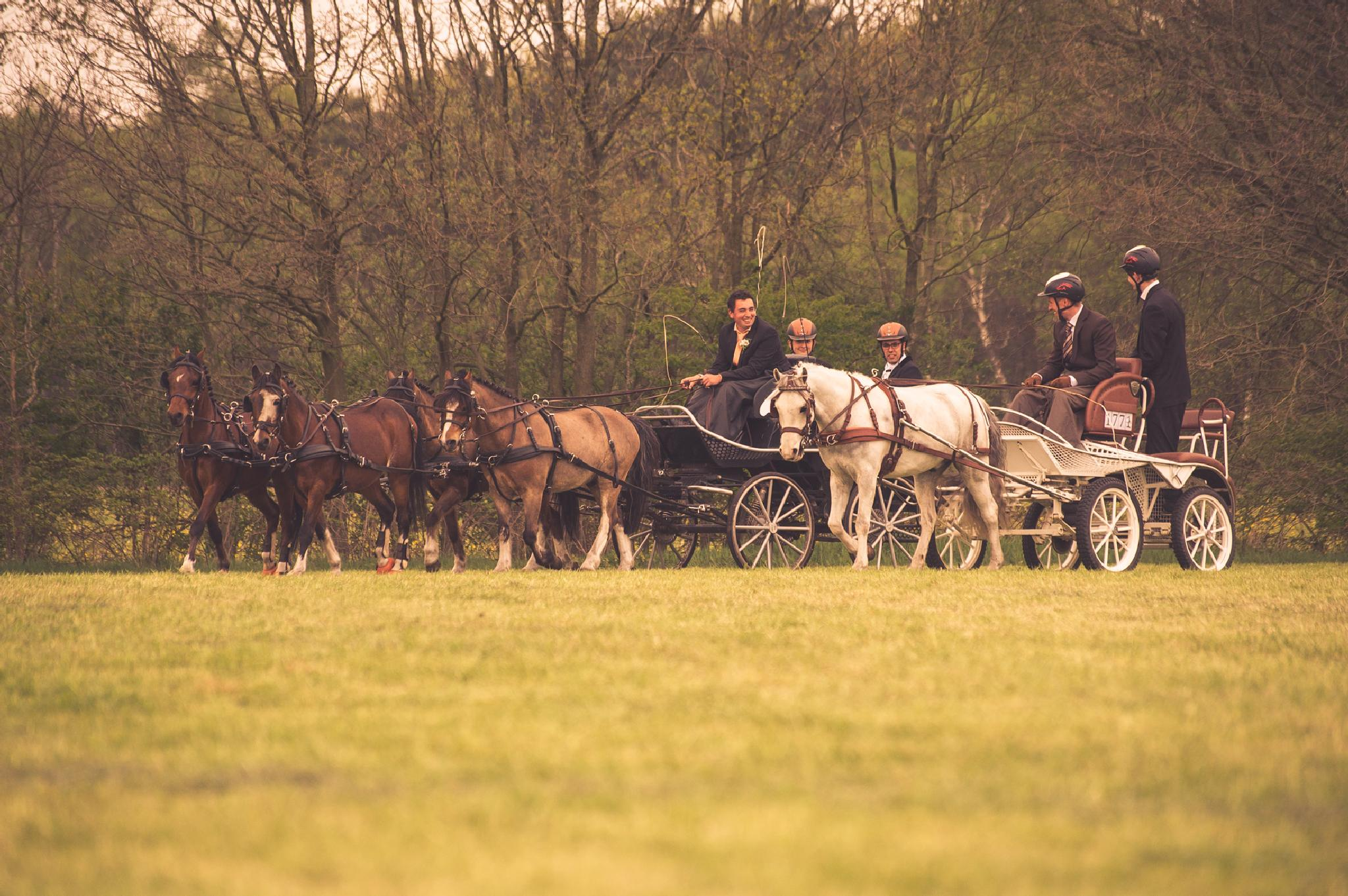 Photo in Animal #horses #horsedriving #animal