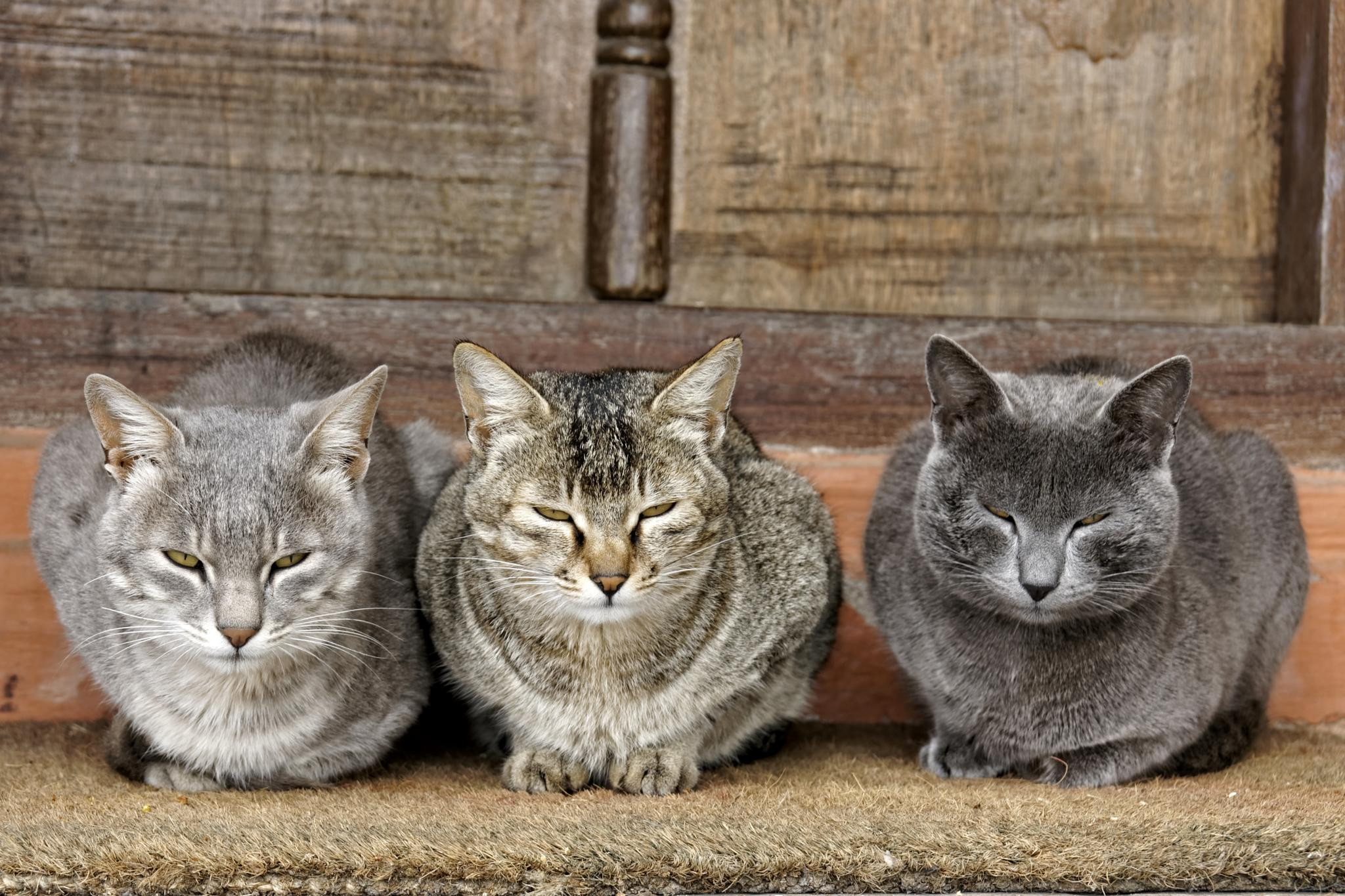 cats by rschuiling