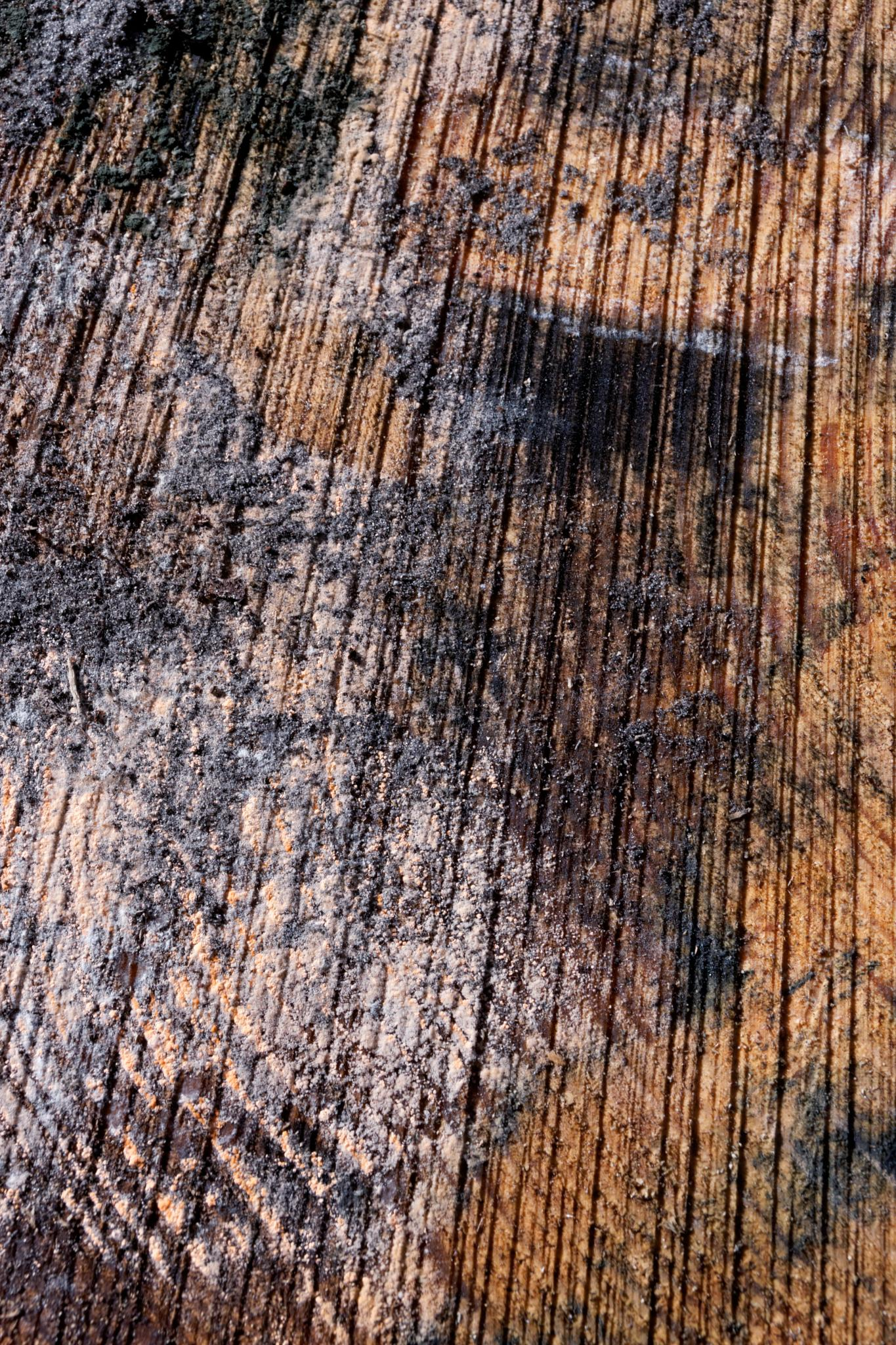 trunk abstract by rschuiling