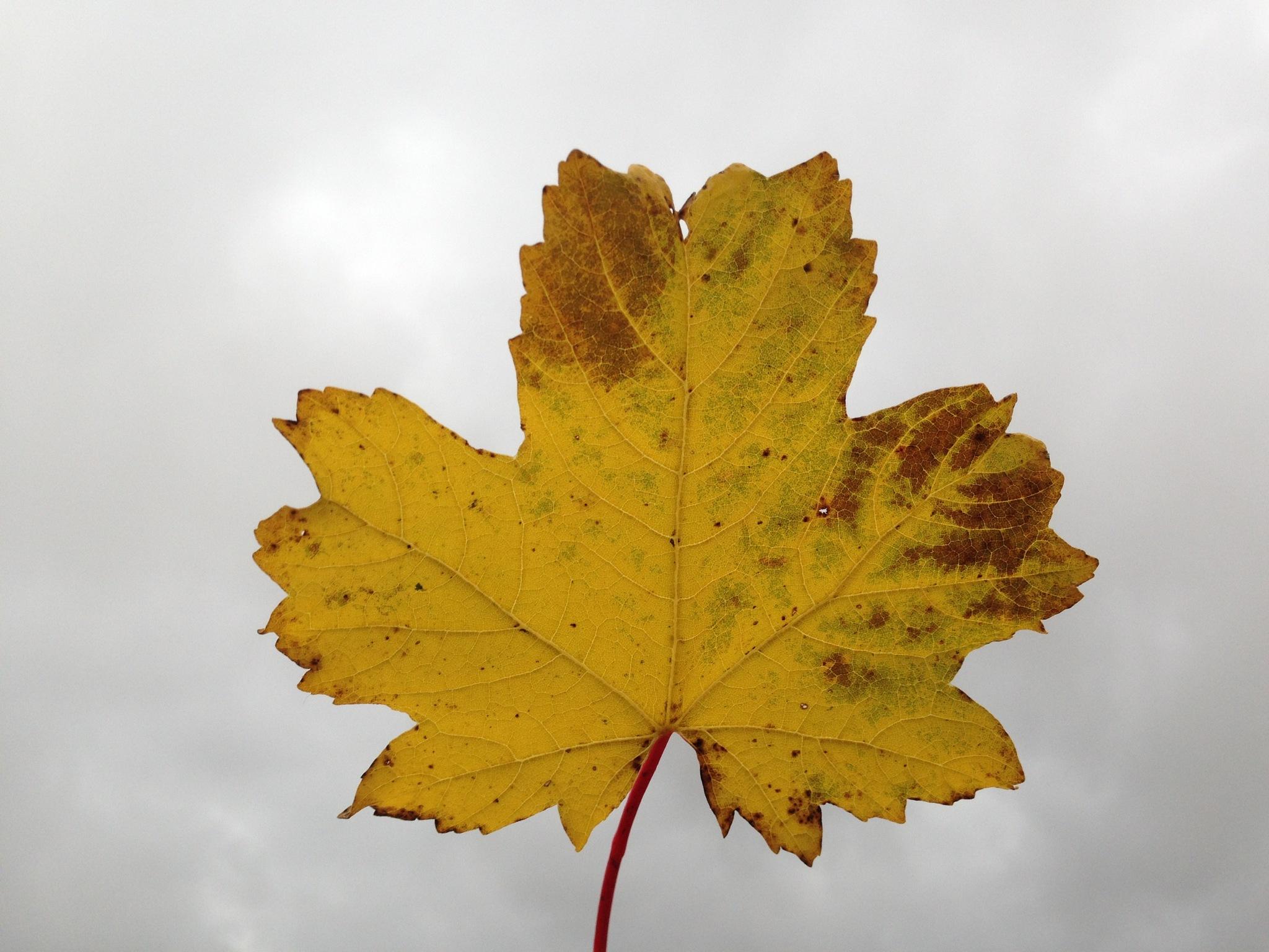 autumn by viola visbeen