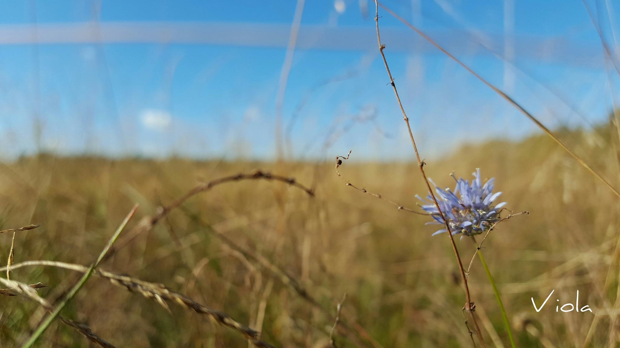 flora  by viola visbeen