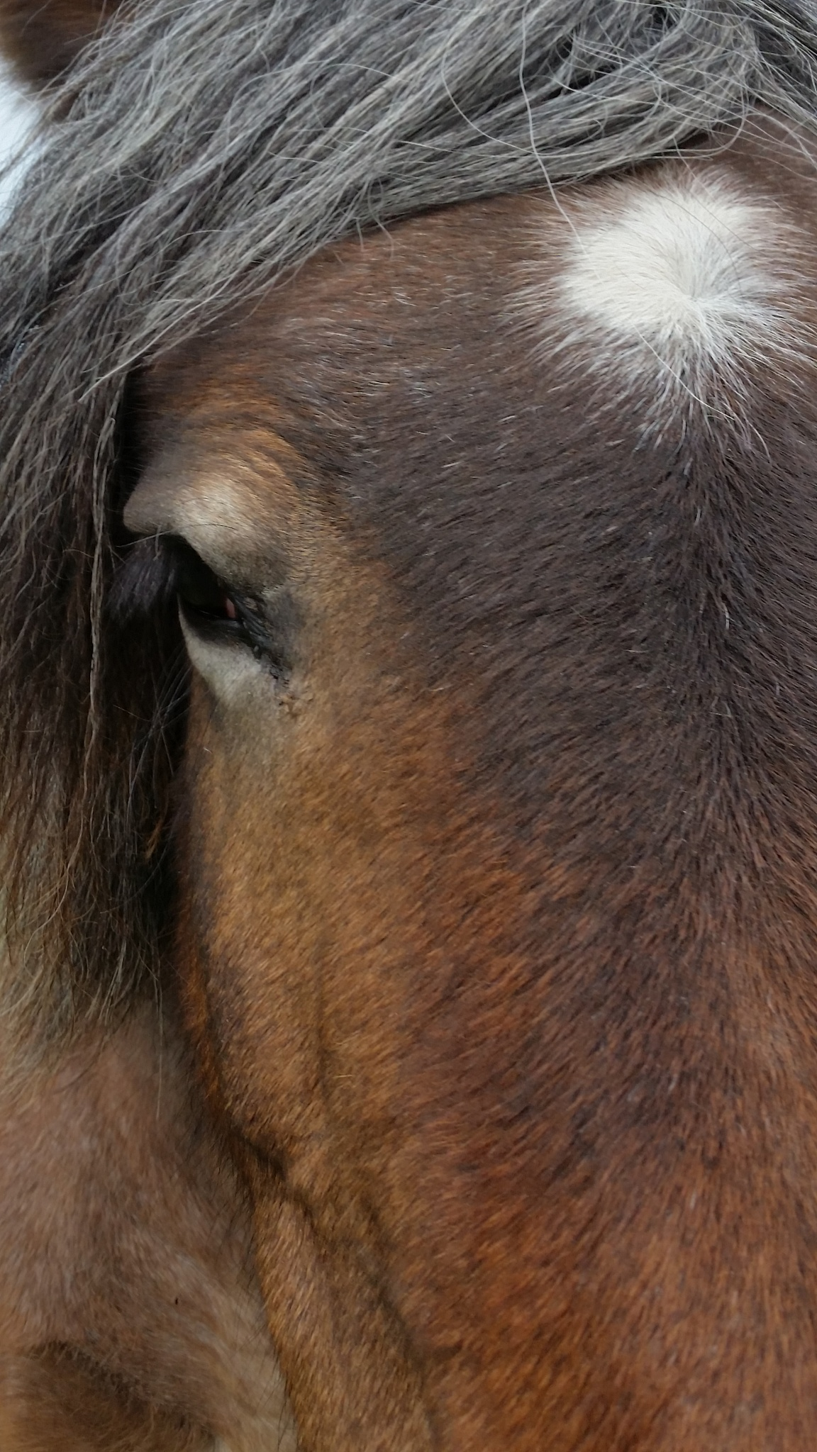 horse by viola visbeen