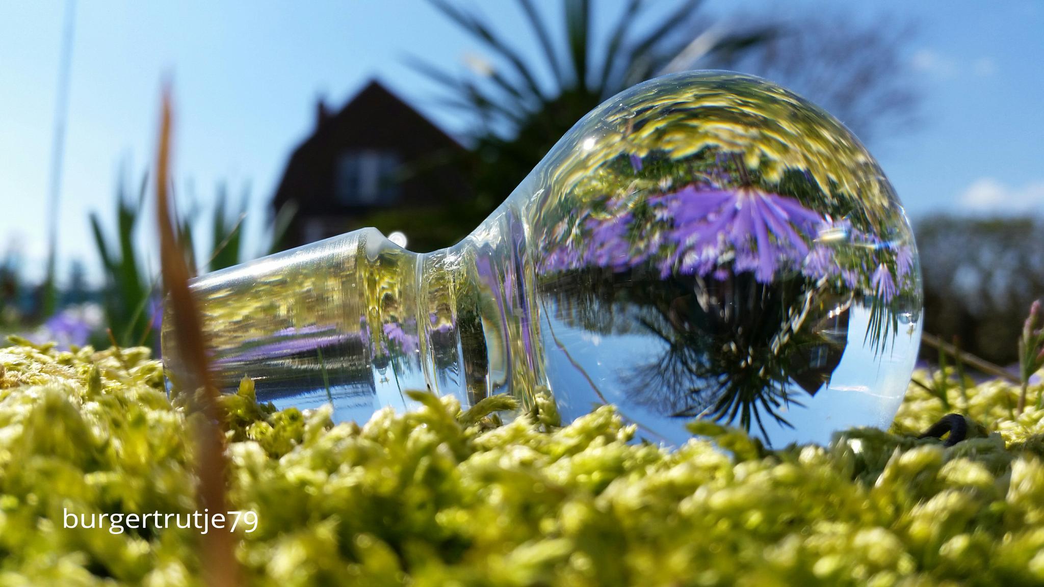 glass plug  by viola visbeen
