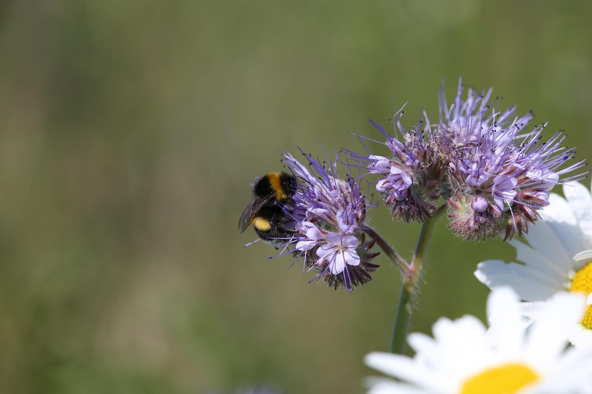 bee by viola visbeen