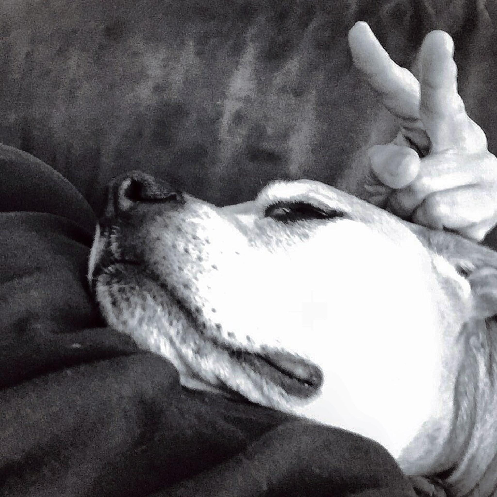The best pooch ever by maryann.mishko