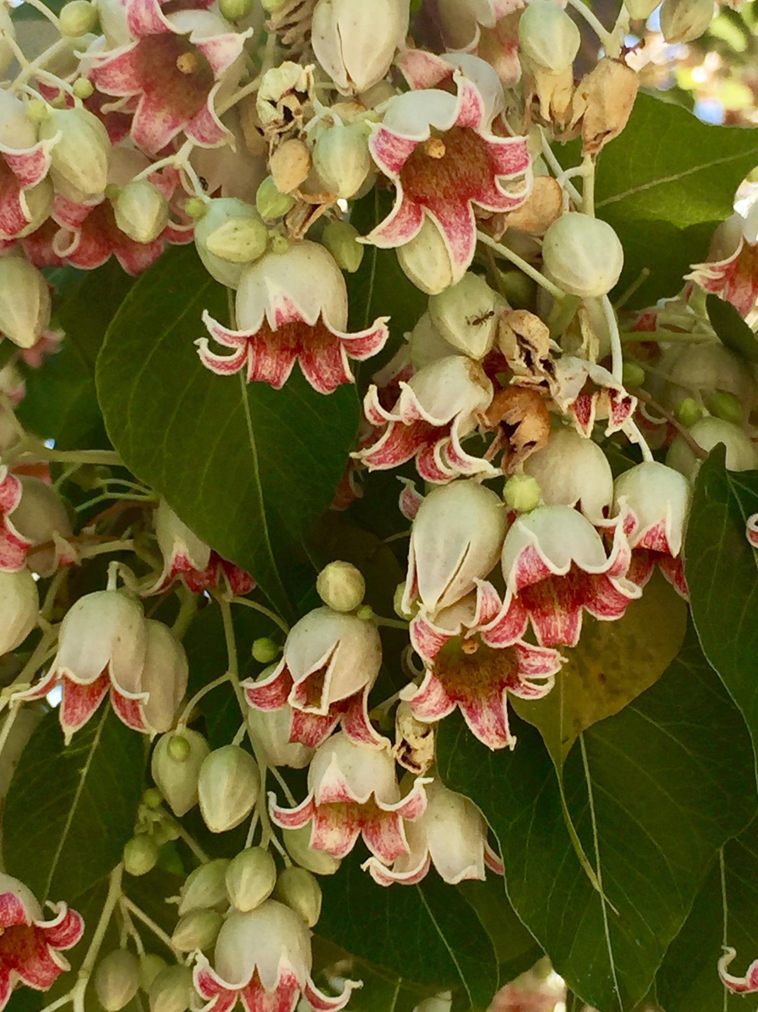 Pretty little flowers on a tree by maryann.mishko