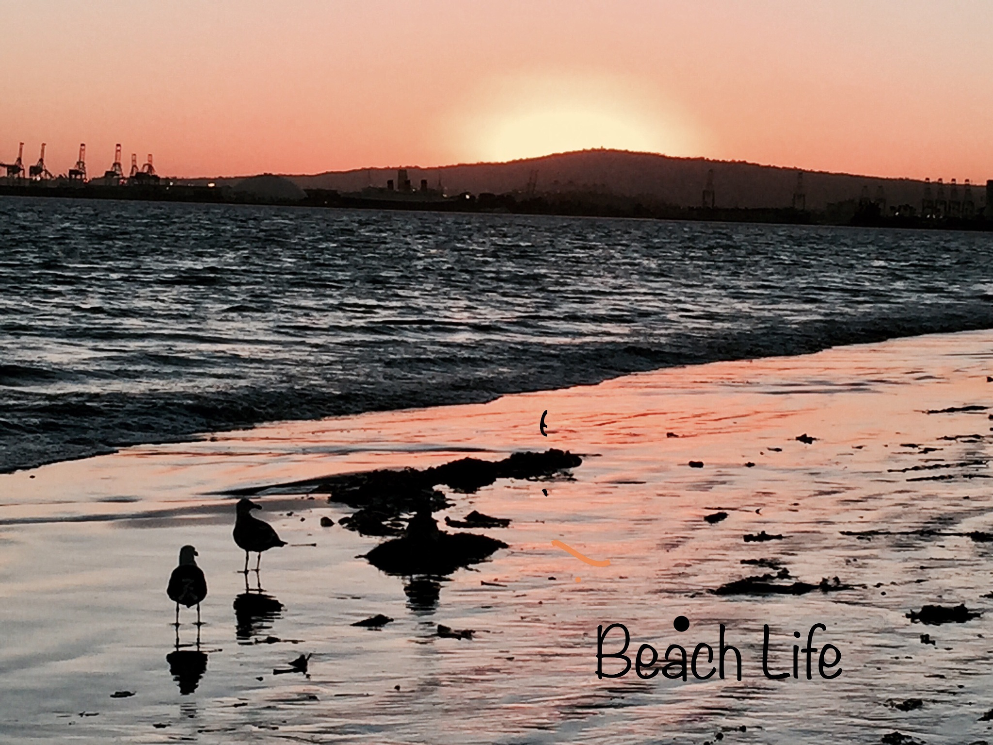 Beach Life by maryann.mishko