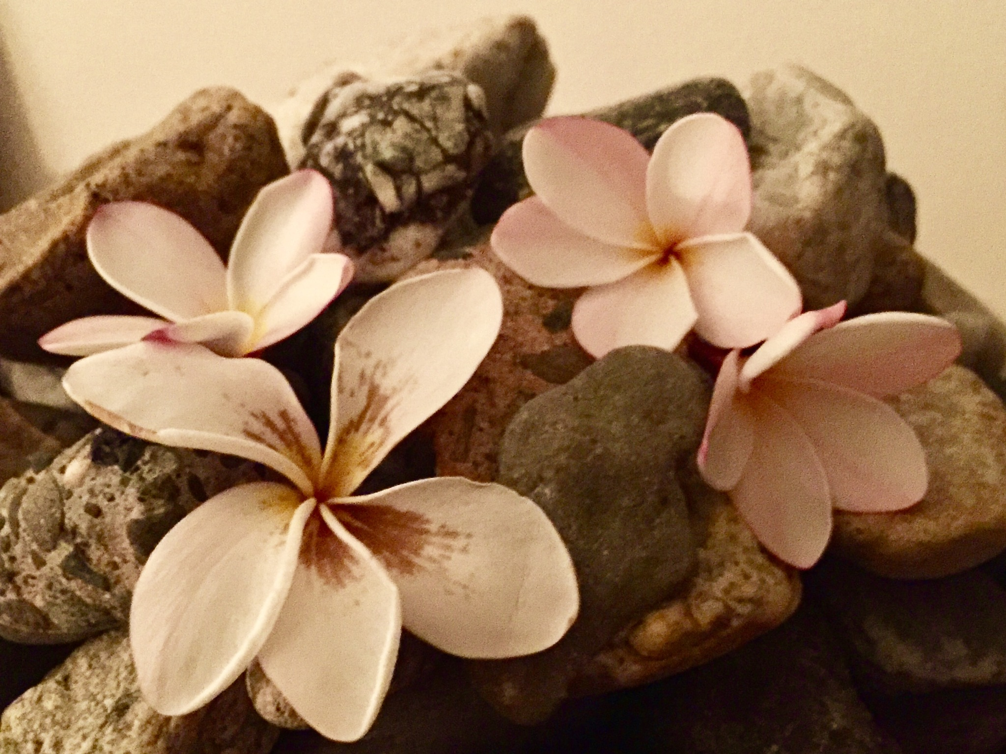 Plumeria on the rocks by maryann.mishko